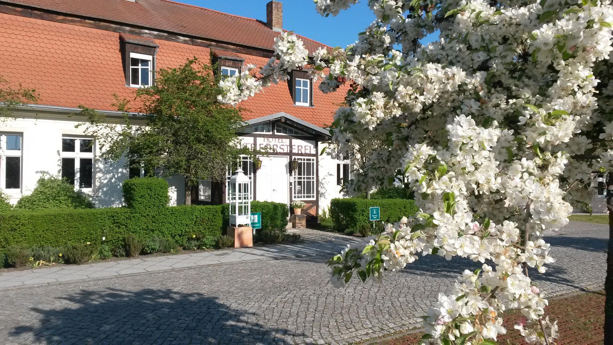 Hotel Alte Försterei Kloster Zinna - Im Frühling ist Spargelzeit!