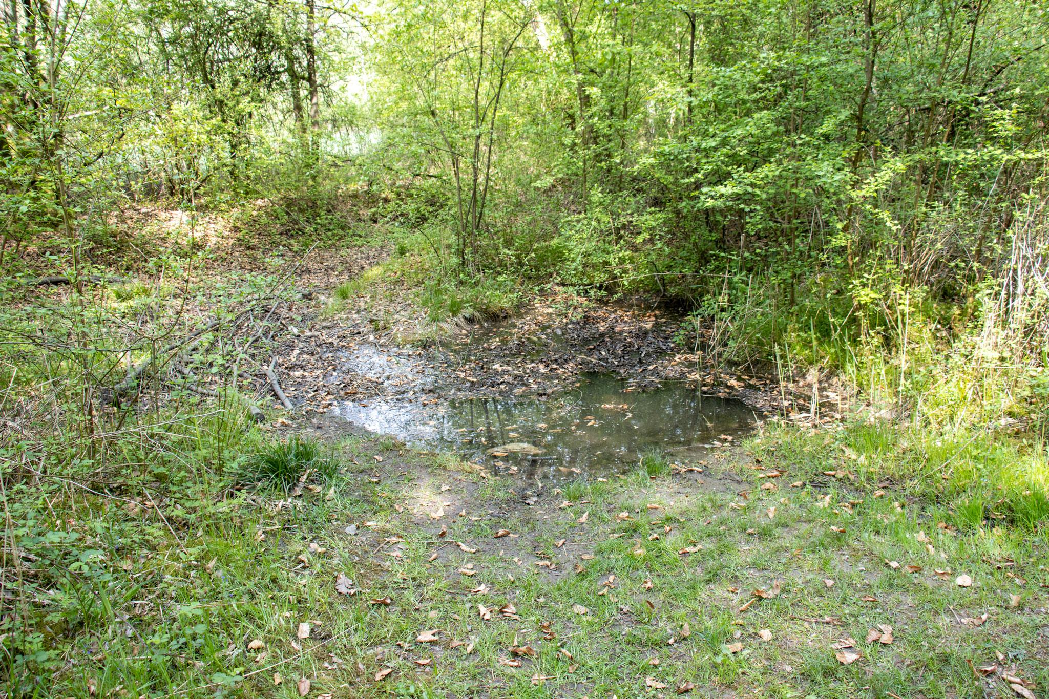 Der gefüllte Teich (Foto: B. Budig)