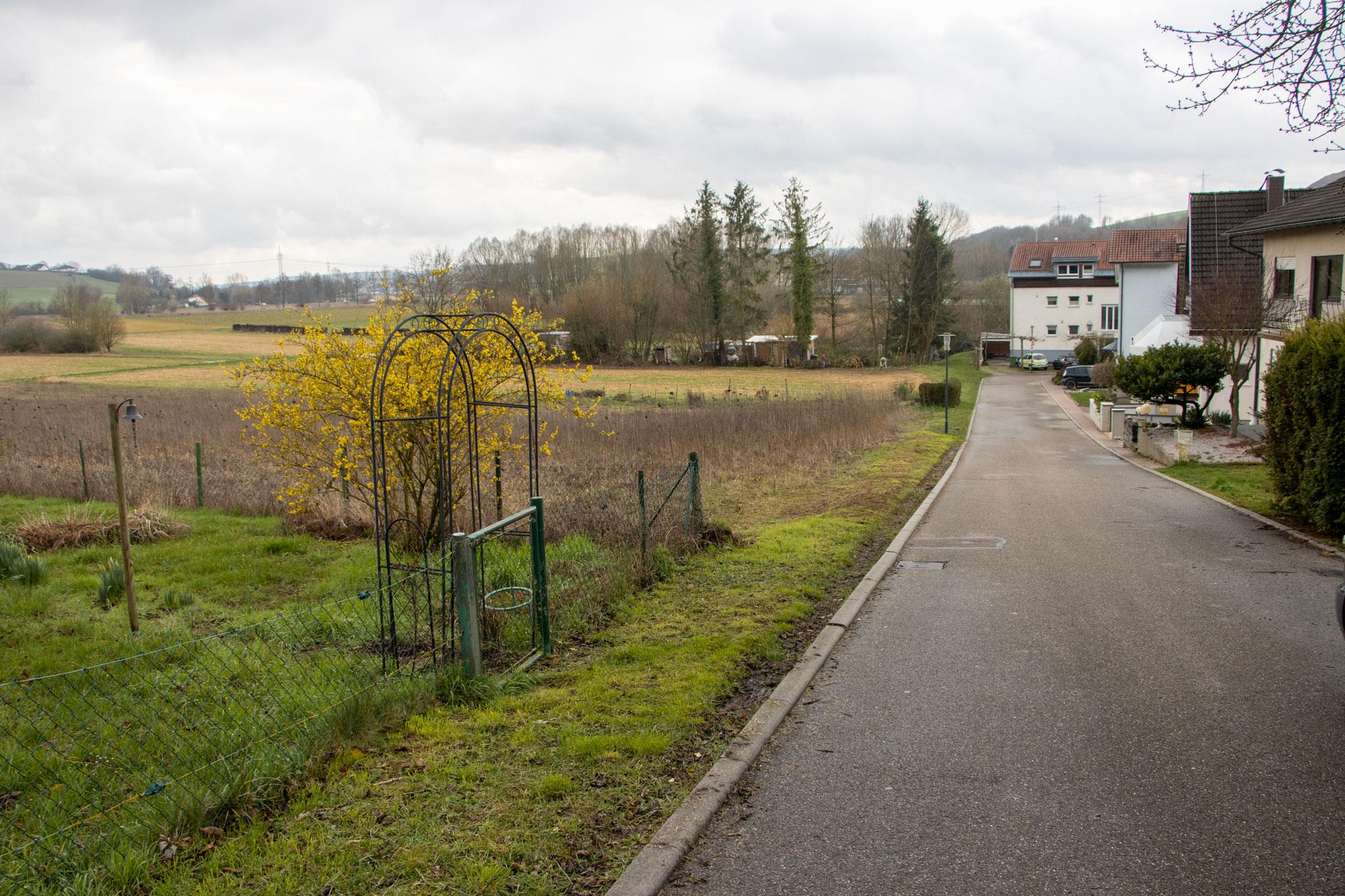 Grünstreifen entlang der Erlenstraße ohne den installierten Krötenzaun (Foto: B. Budig)