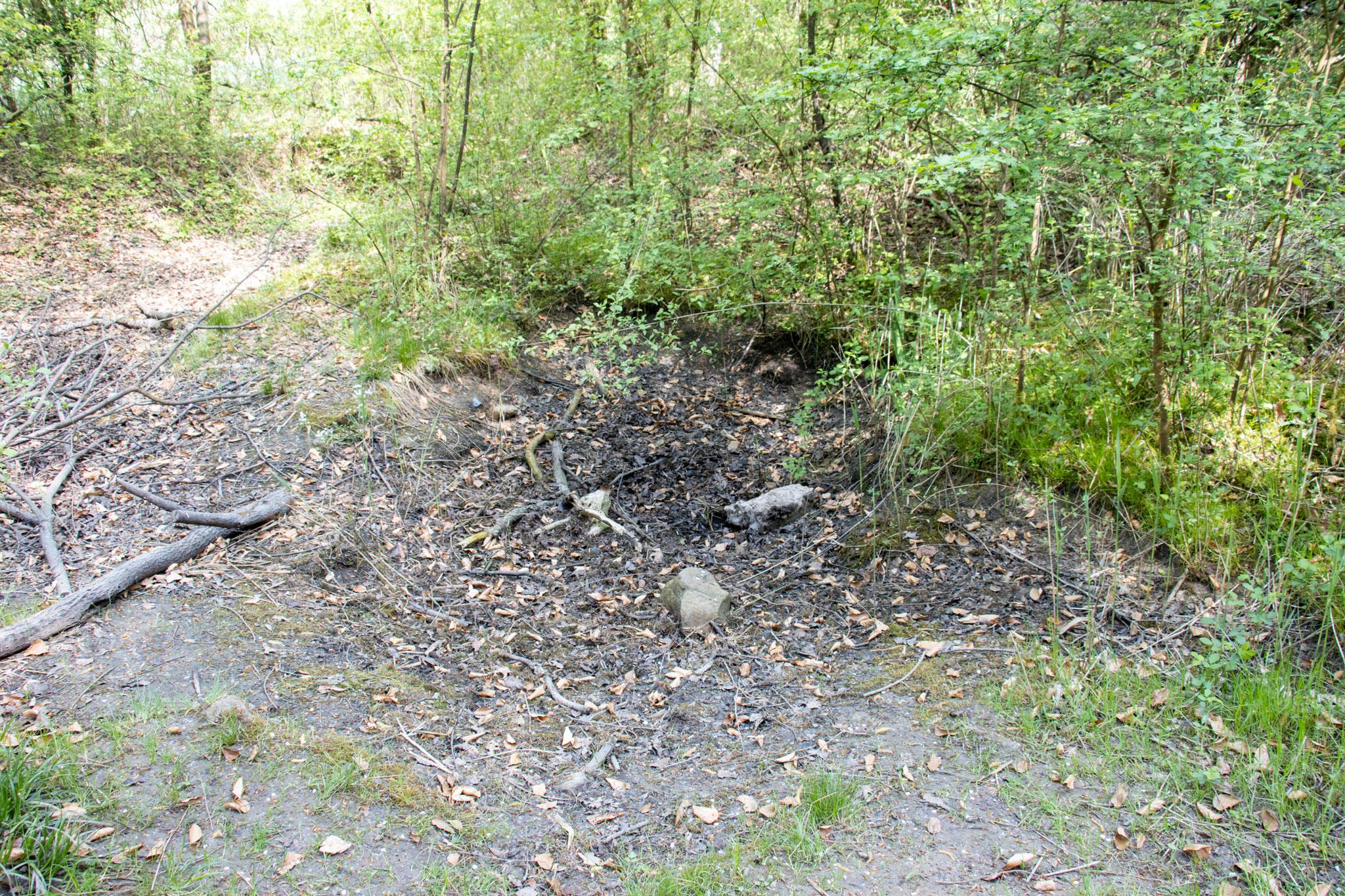 Der ausgetrocknete Teich im Grafenrain (Foto: B. Budig)