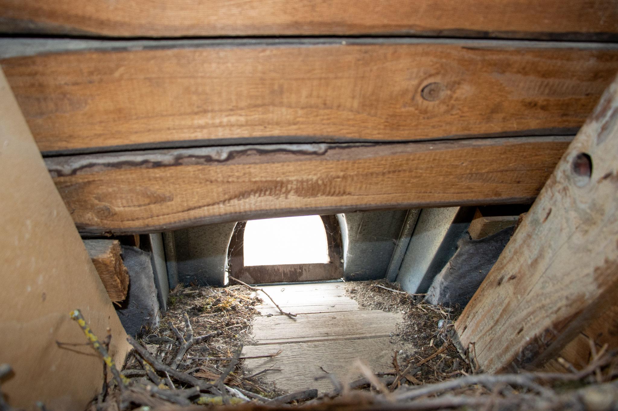 Einflugloch von innen (Foto: B. Budig)