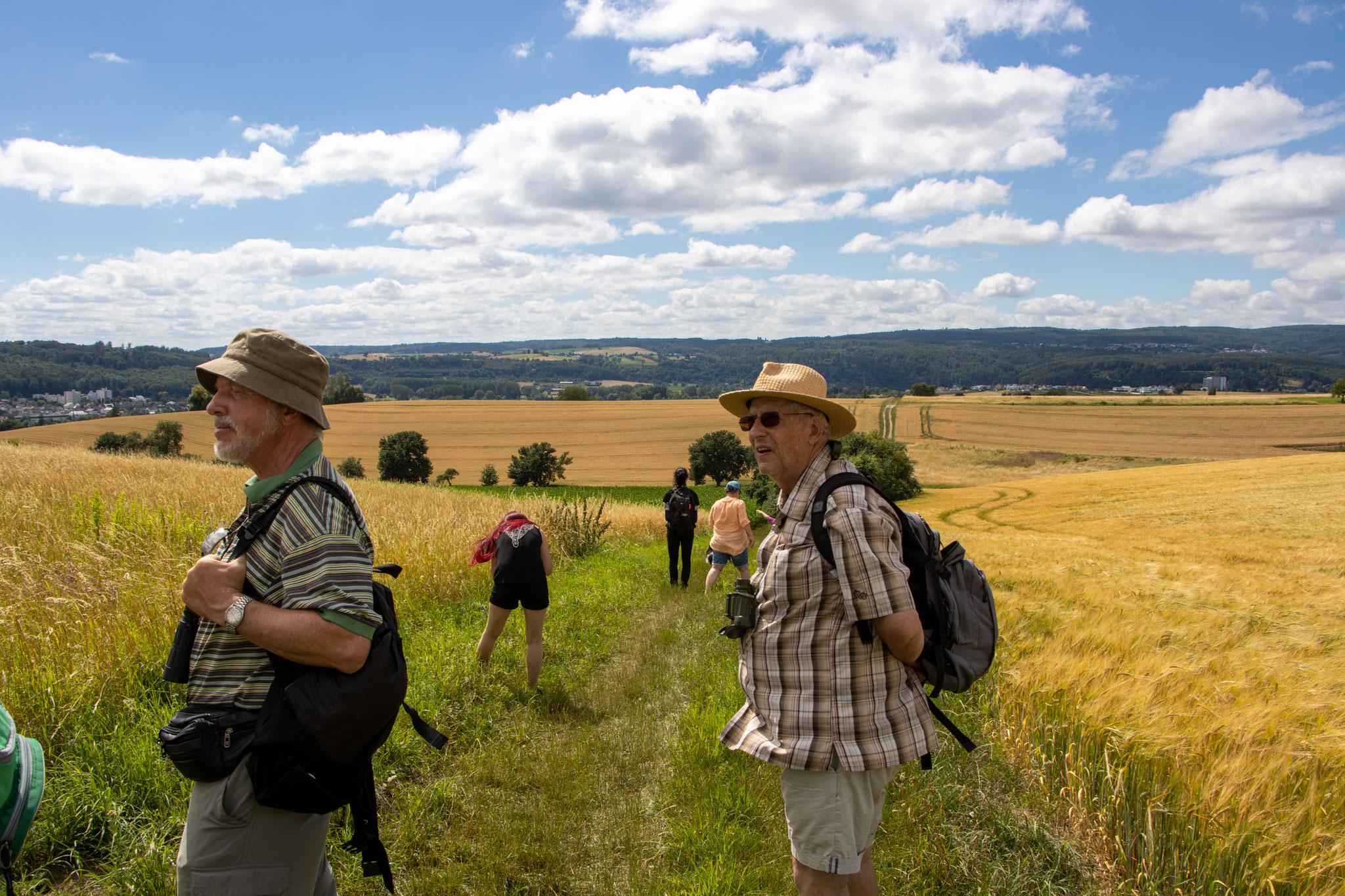 Blick zum Königsstuhl, zwischen Wiese und Gerstenfeld (HB)