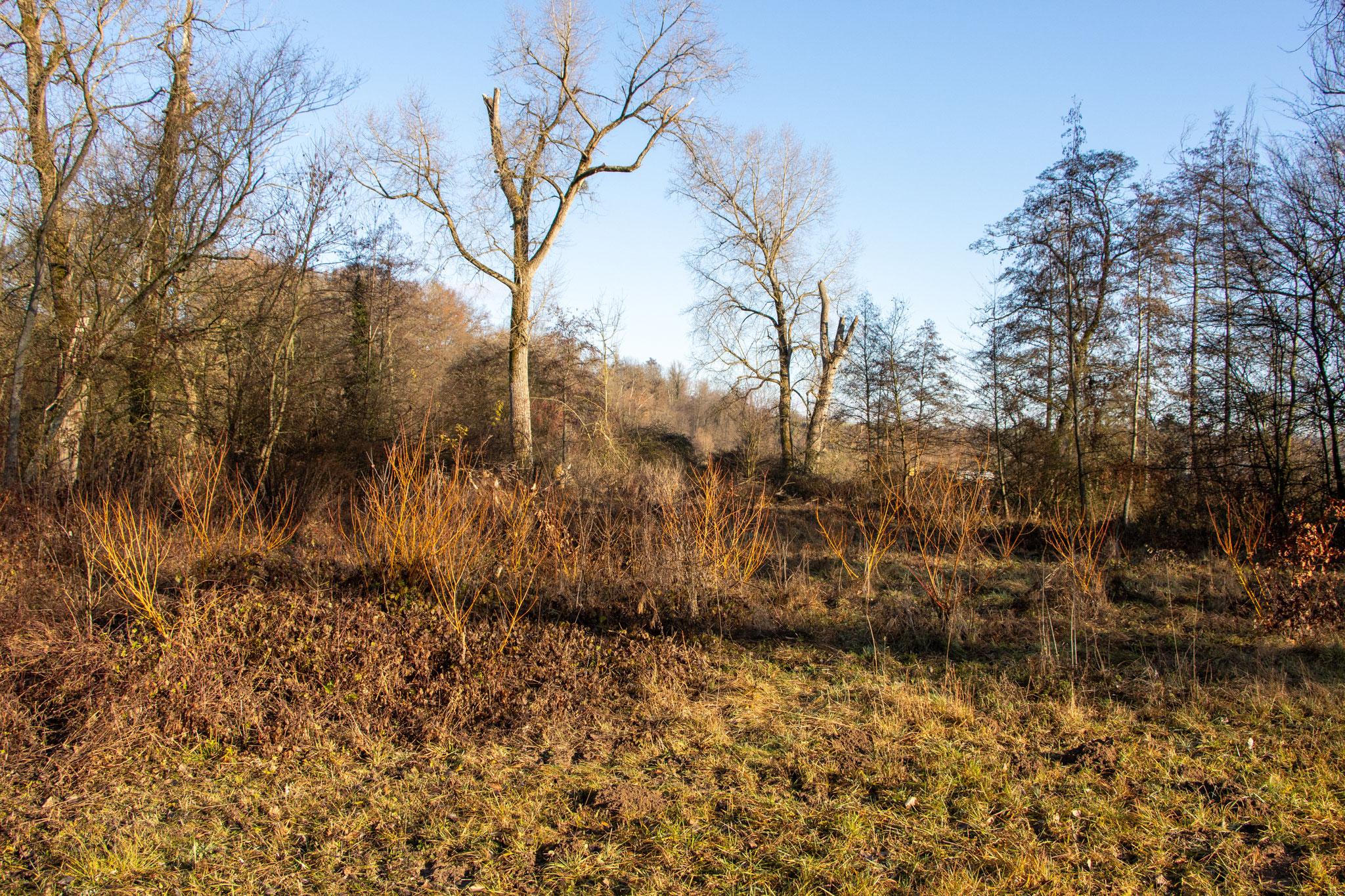 Ziel: Die Brombeeren zwischen den Weiden sollen gemäht werden