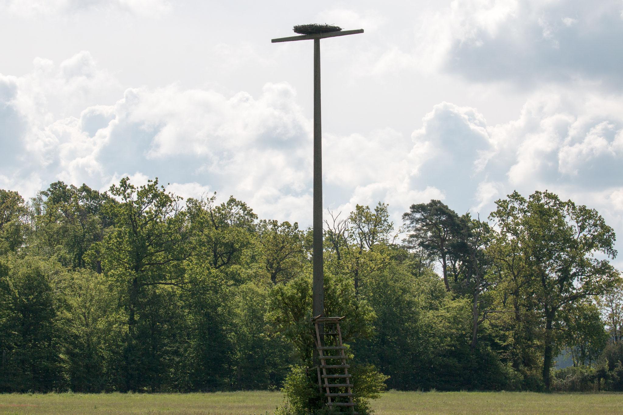 Storchennisthilfe auf einem Strommasten