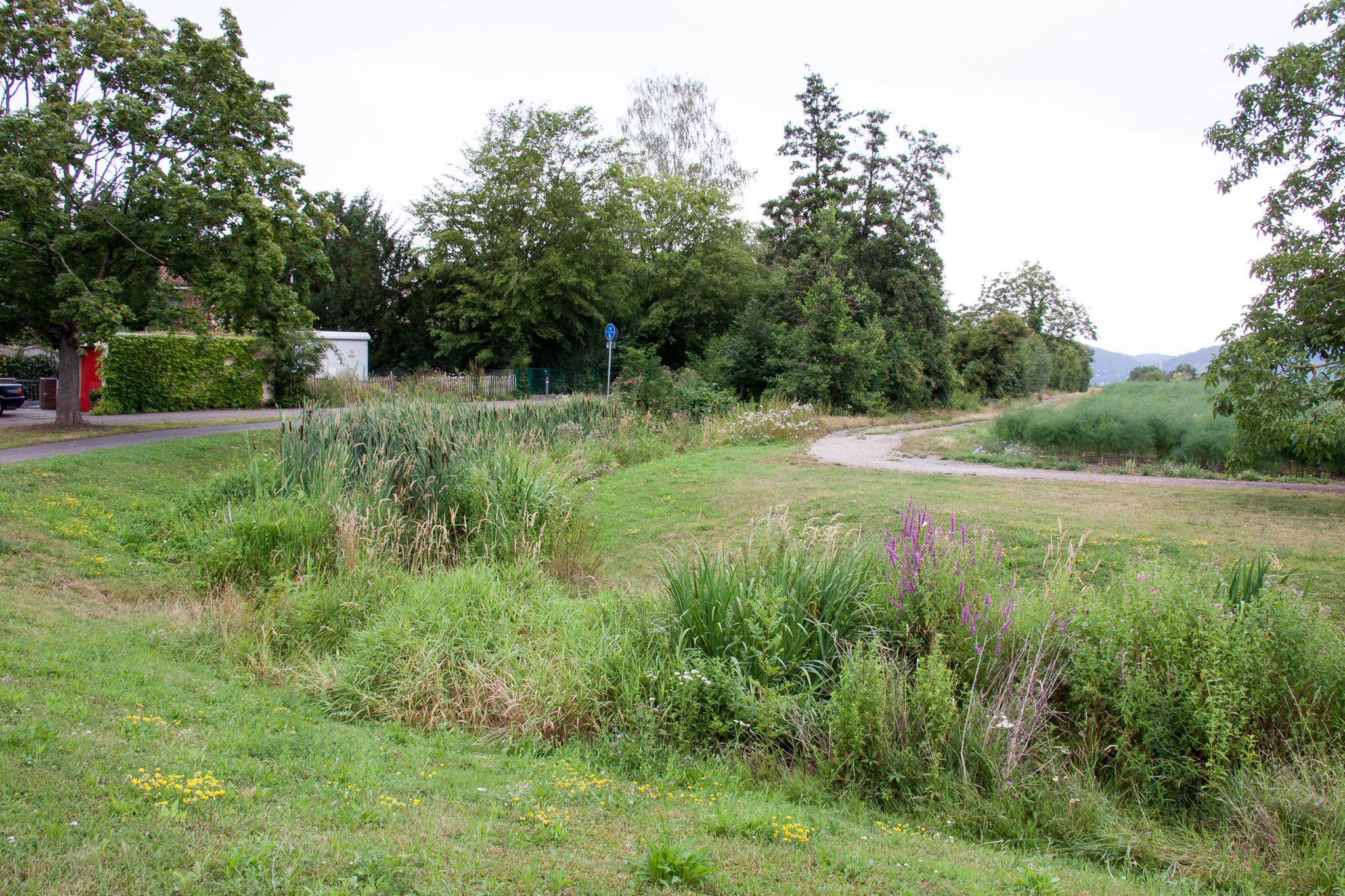 Kanzelbach am Ortsrand Ladenburgs