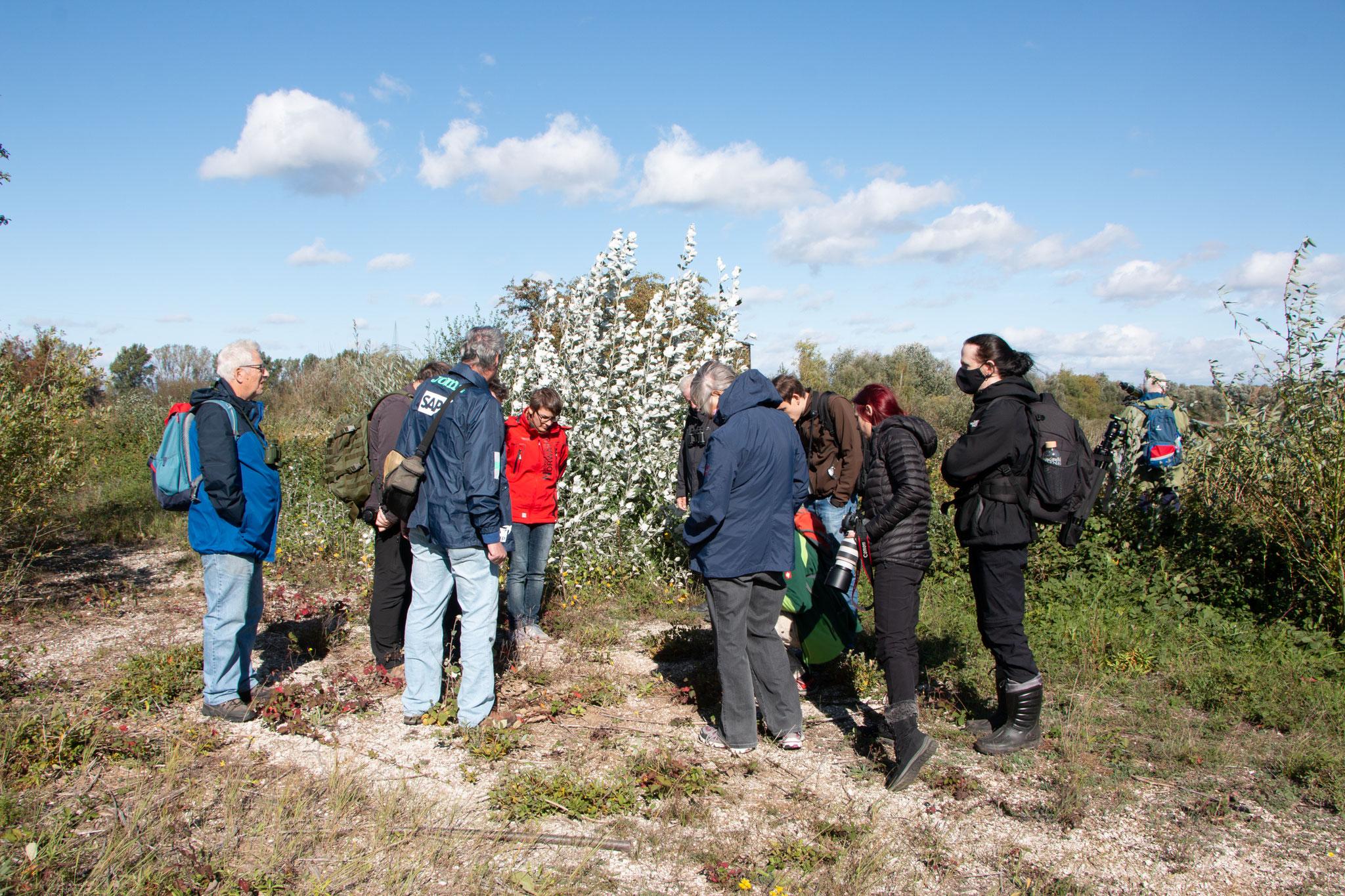 Auf der Suche nach der blauflügeligen Ödlandschrecke (Foto: B. Budig)