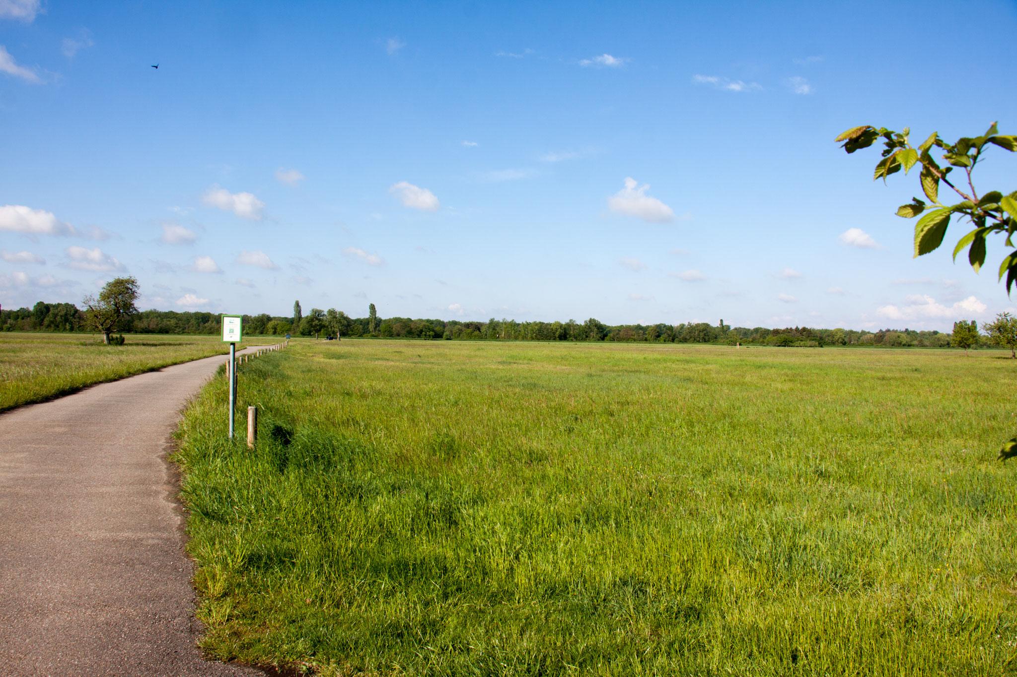 Größte zusammenhängende Wiesenfläche im nordbadischen Raum