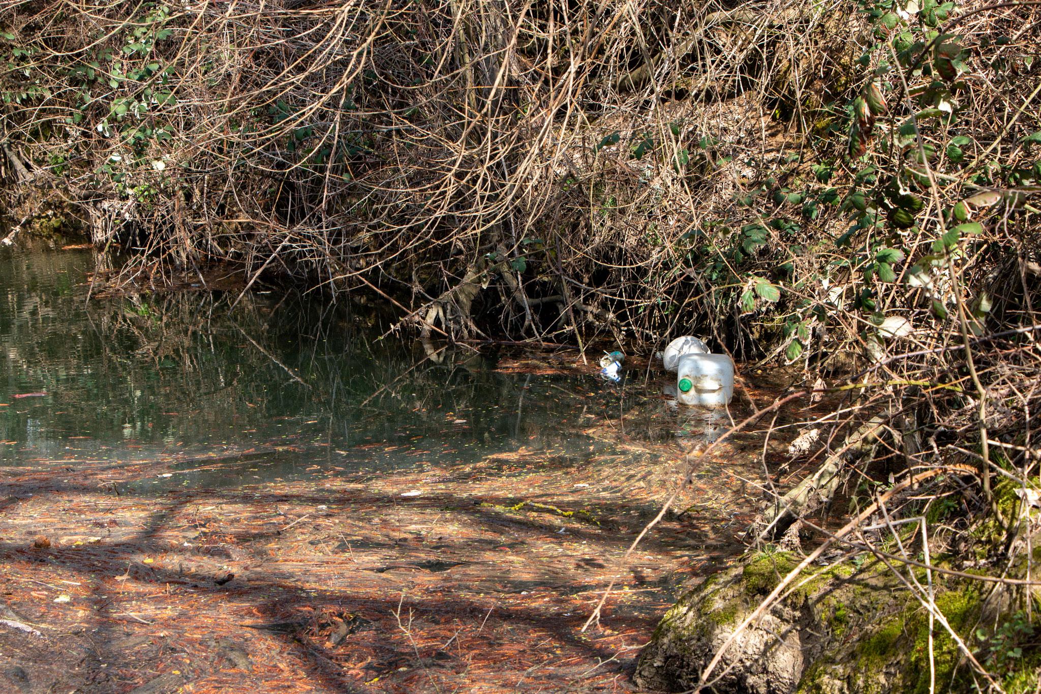 Unerreichbar: Schwimmender Müll in der Elsenz