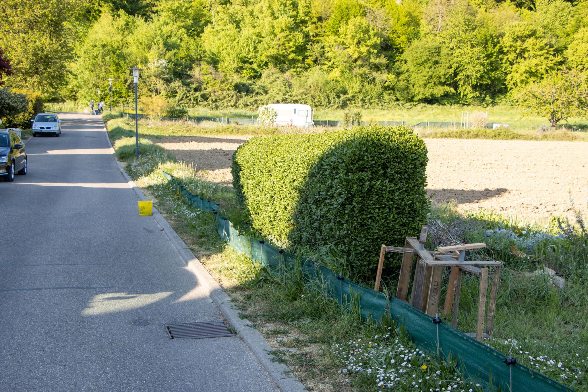 Der zugewachsene Krötenzaun (Foto: B.Budig)