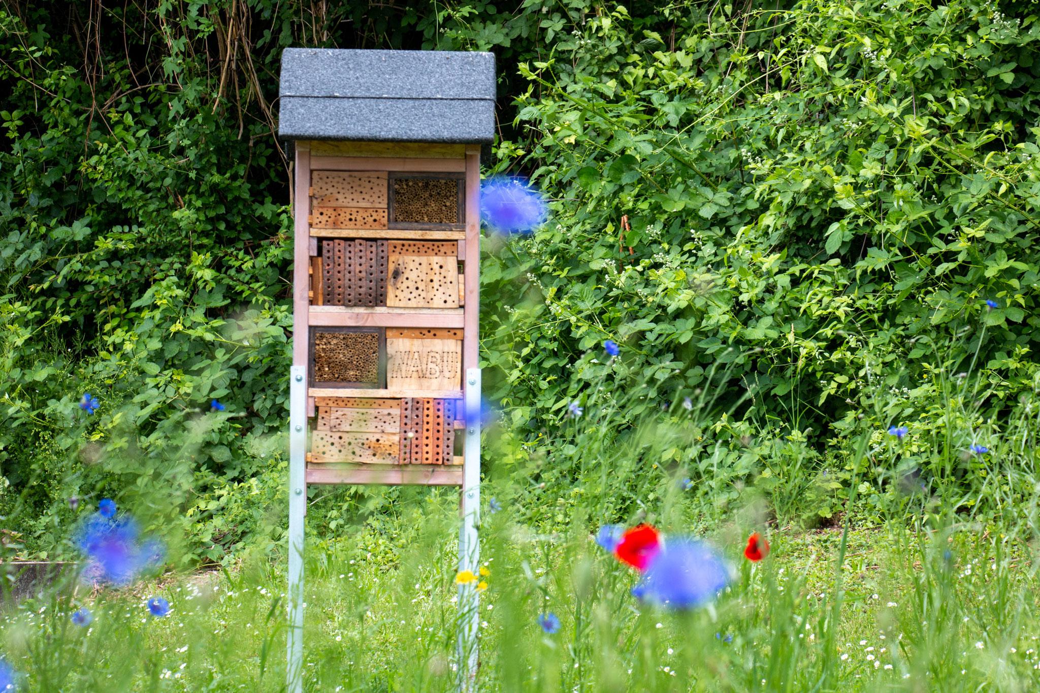 Wildbienennisthilfe am Rathaus (Foto: H. Budig)