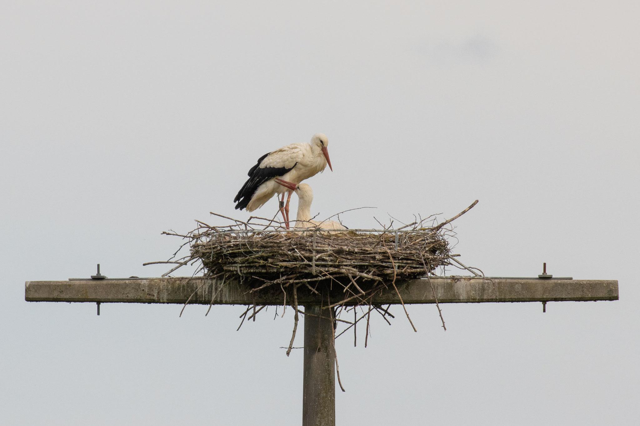 Zu zweit im Nest am 20.05.21 (Foto: B. Budig)