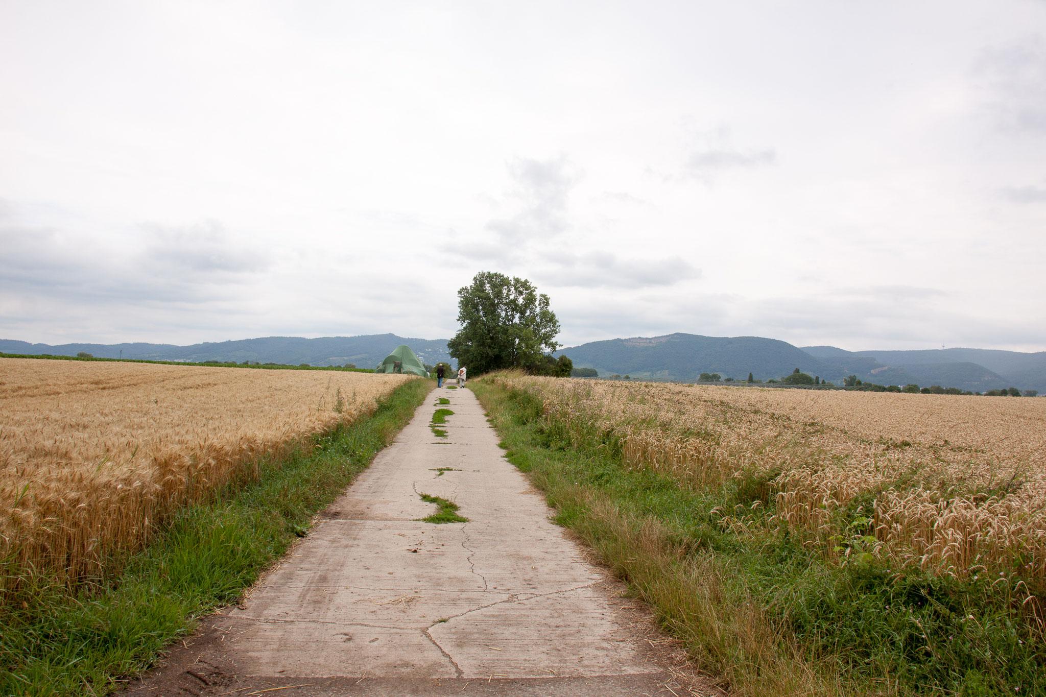 Agrarlandschaft rund um Ladenburg