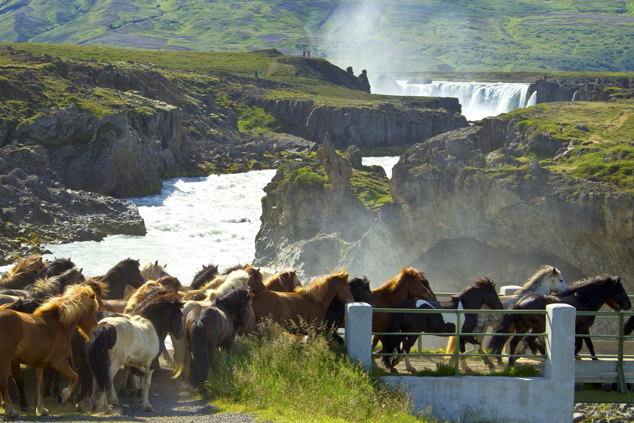 © Hans G. Lehmann | Iceland horses near the waterfall Godafoss, Iceland