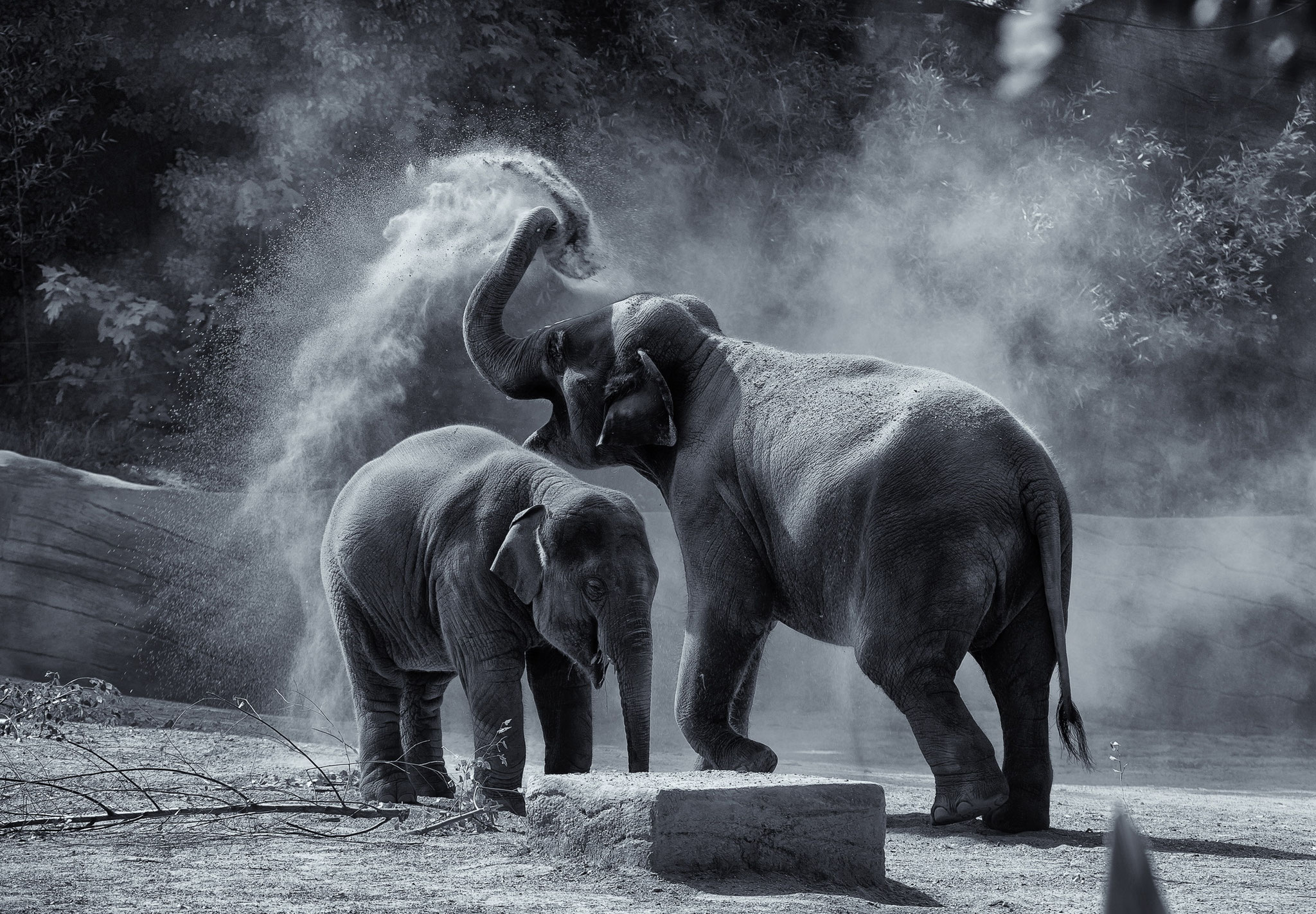 © Hans G. Lehmann | Elephants taking a sand shower at Hagenbeck-Zoo, Hamburg