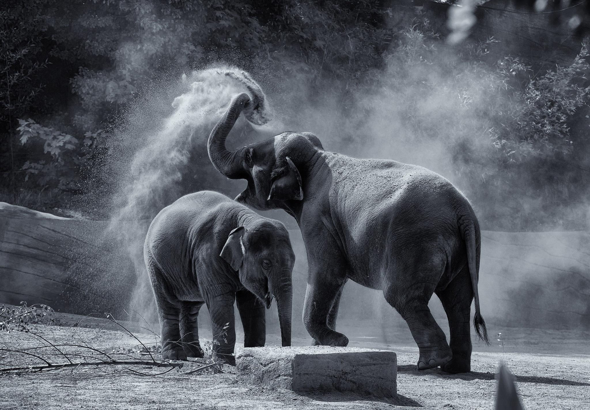 © Hans G. Lehmann | Elefanten im Sandbad im Hagenbeck-Zoo, Hamburg
