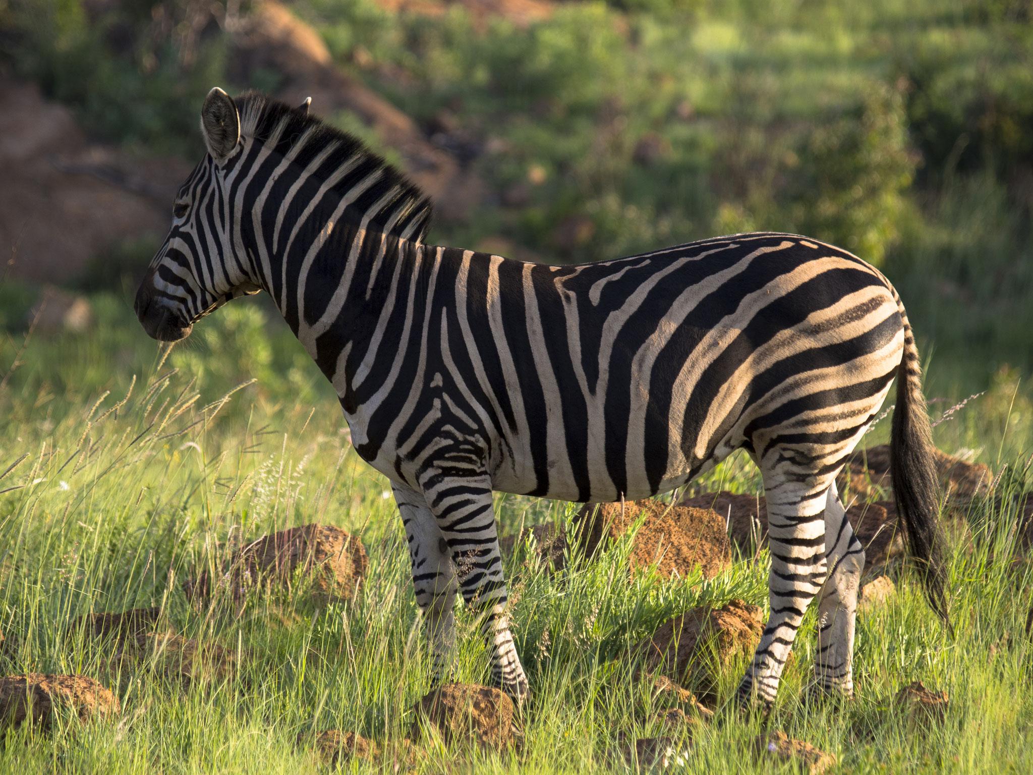 Pilanesberg, South Africa
