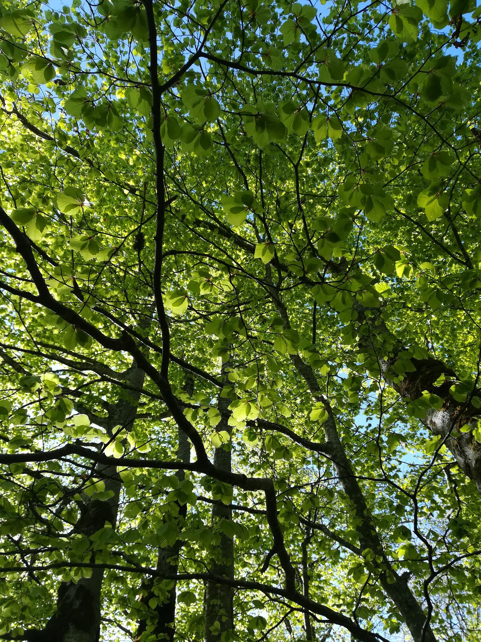 Venez respirer au rythme de la forêt.