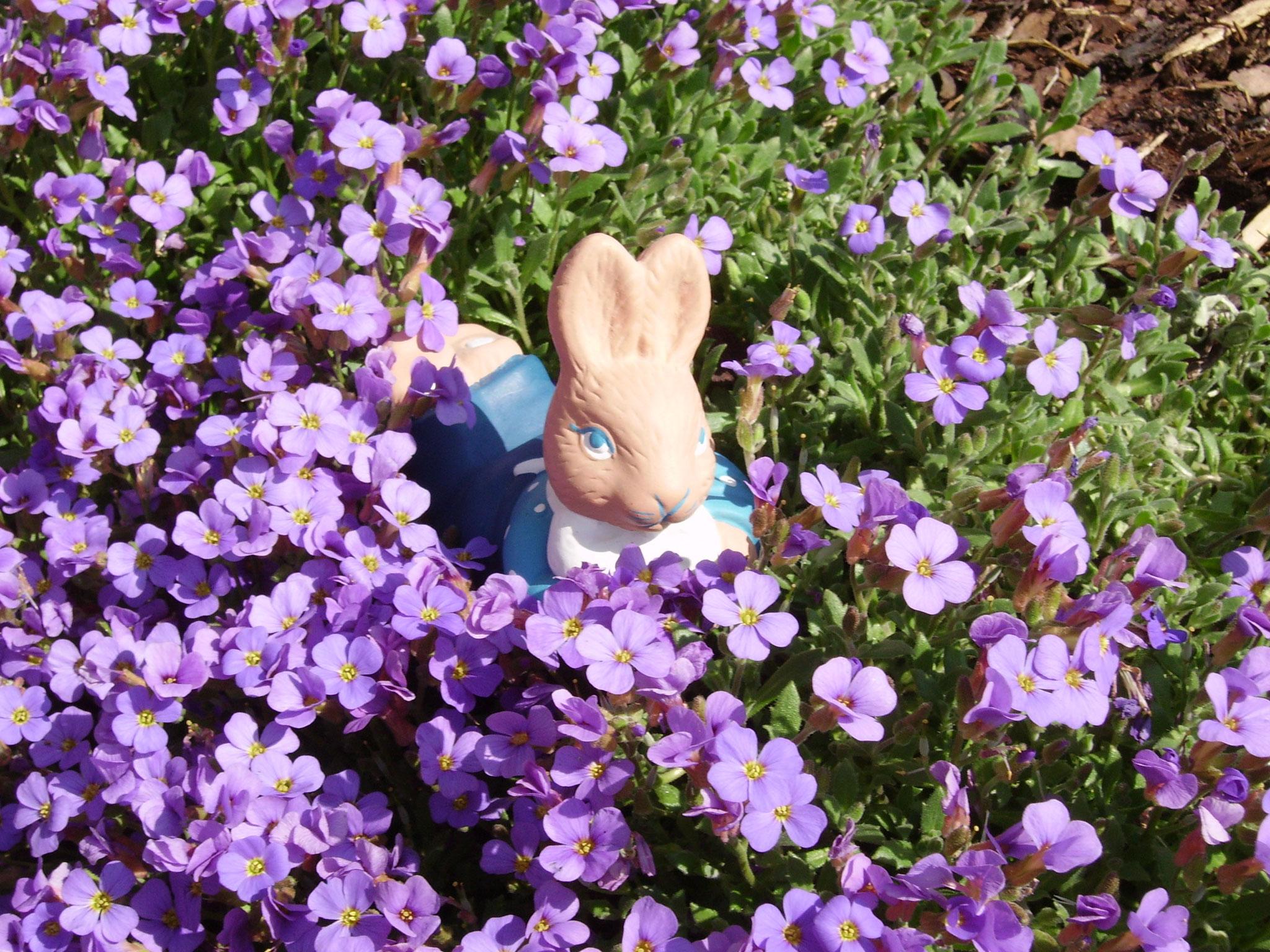 Endlich der Frühling kommt