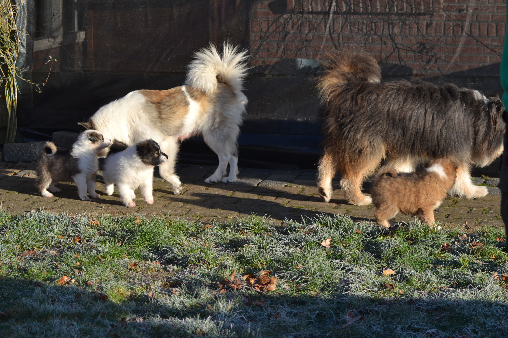 mama en papa en wat pups