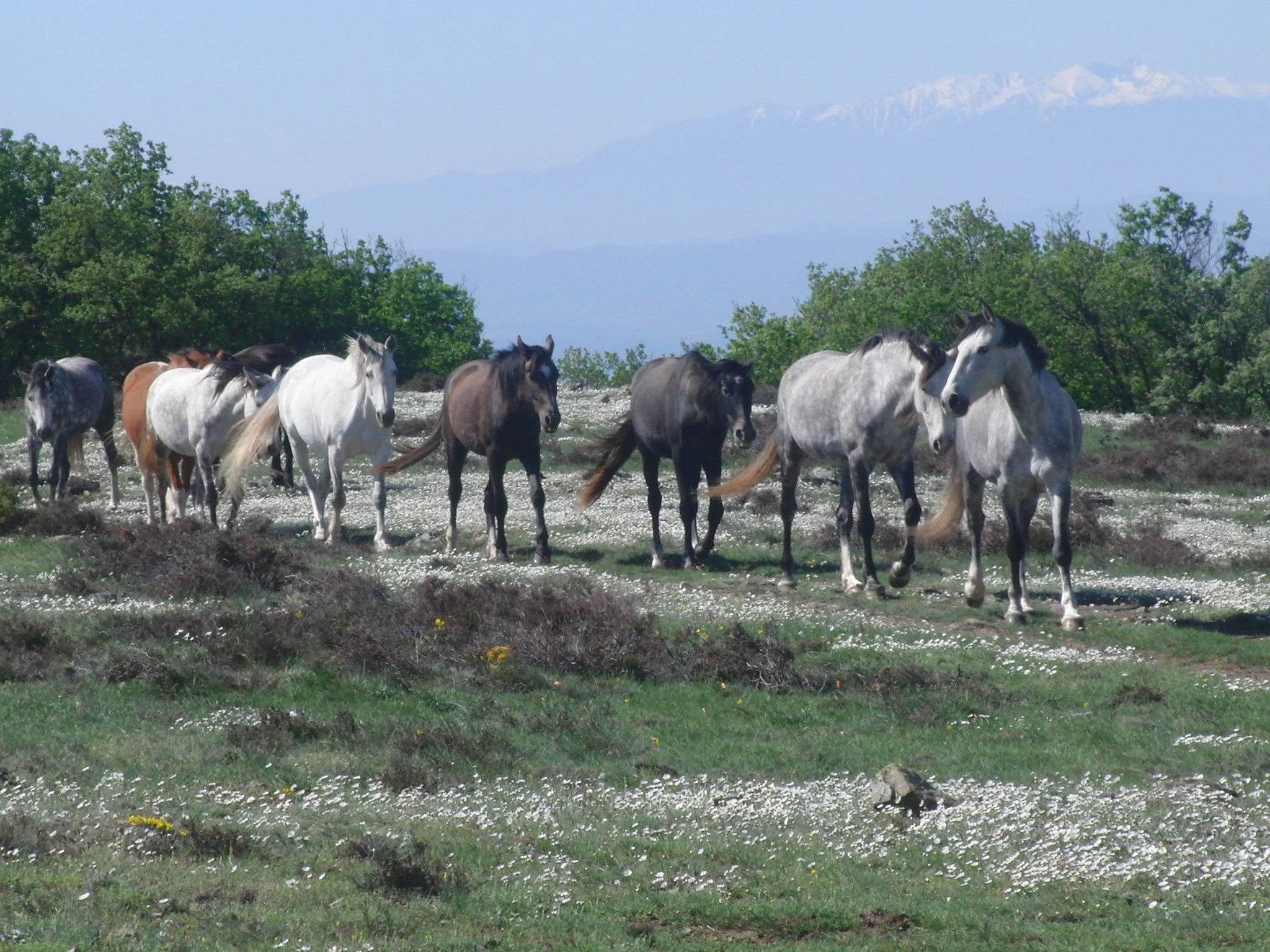 Unsere Pferdeherde
