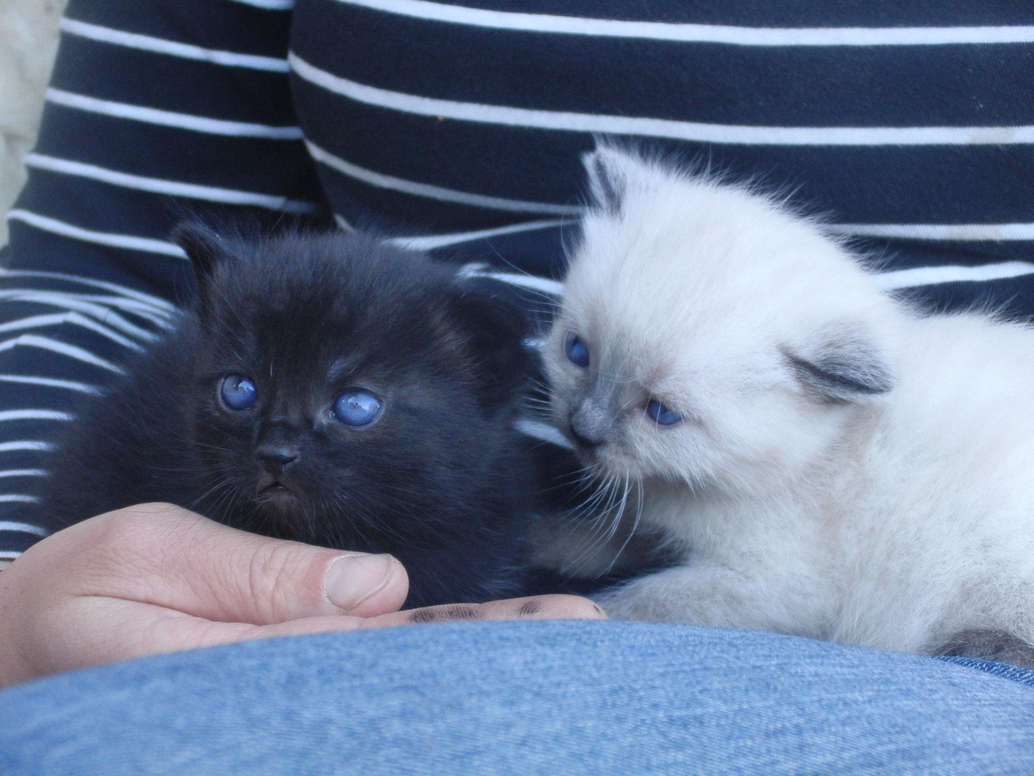 Welche Aufgaben haben die Hofkatzen?