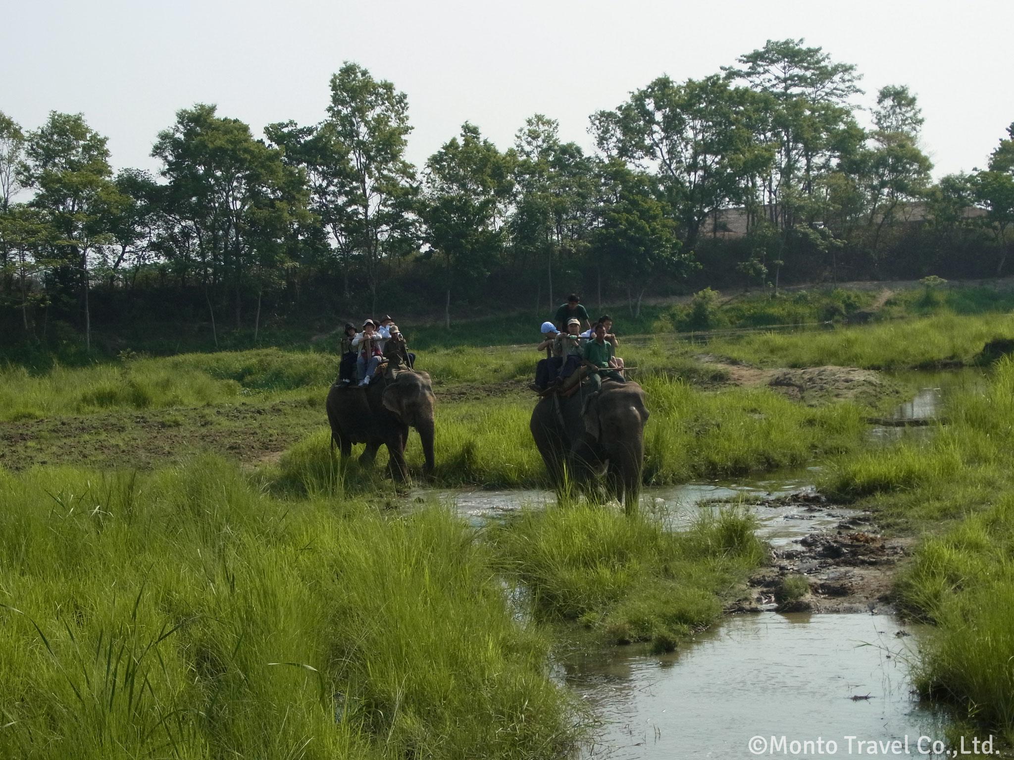 チトワン国立公園 象サファリ