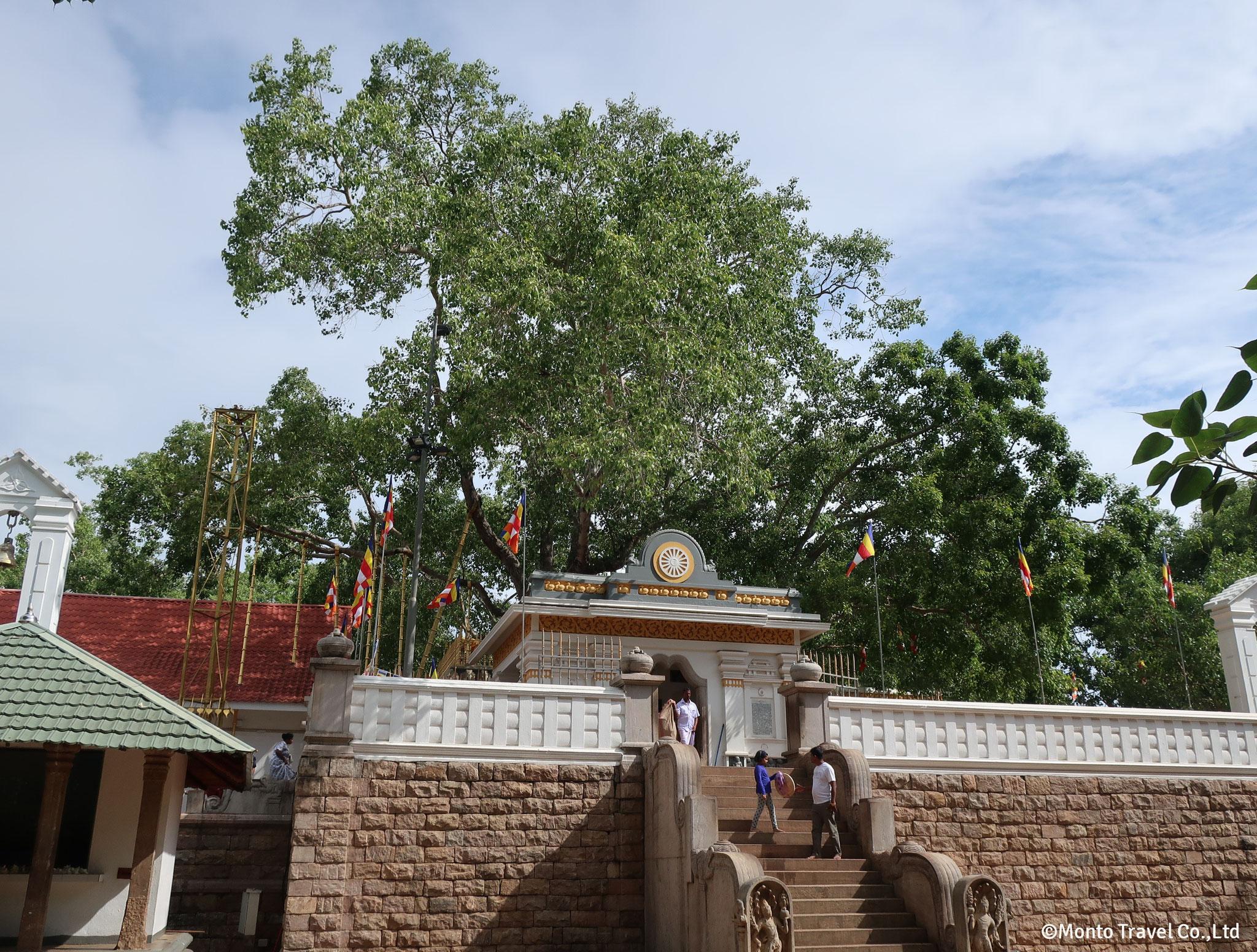 シュリー・マハー菩提樹