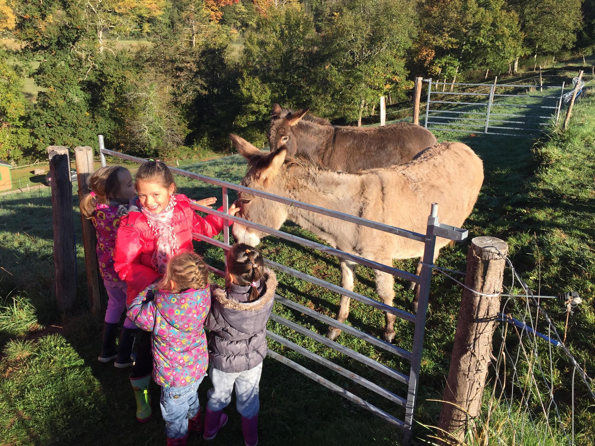 Les ânes à câlins