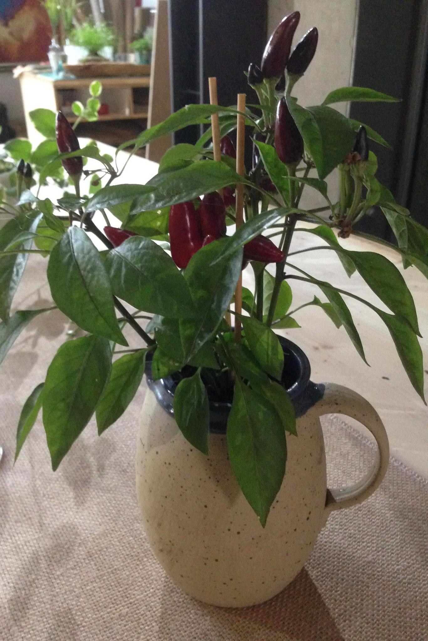 Präsentationsbeispiel Pflanze in Teekrug
