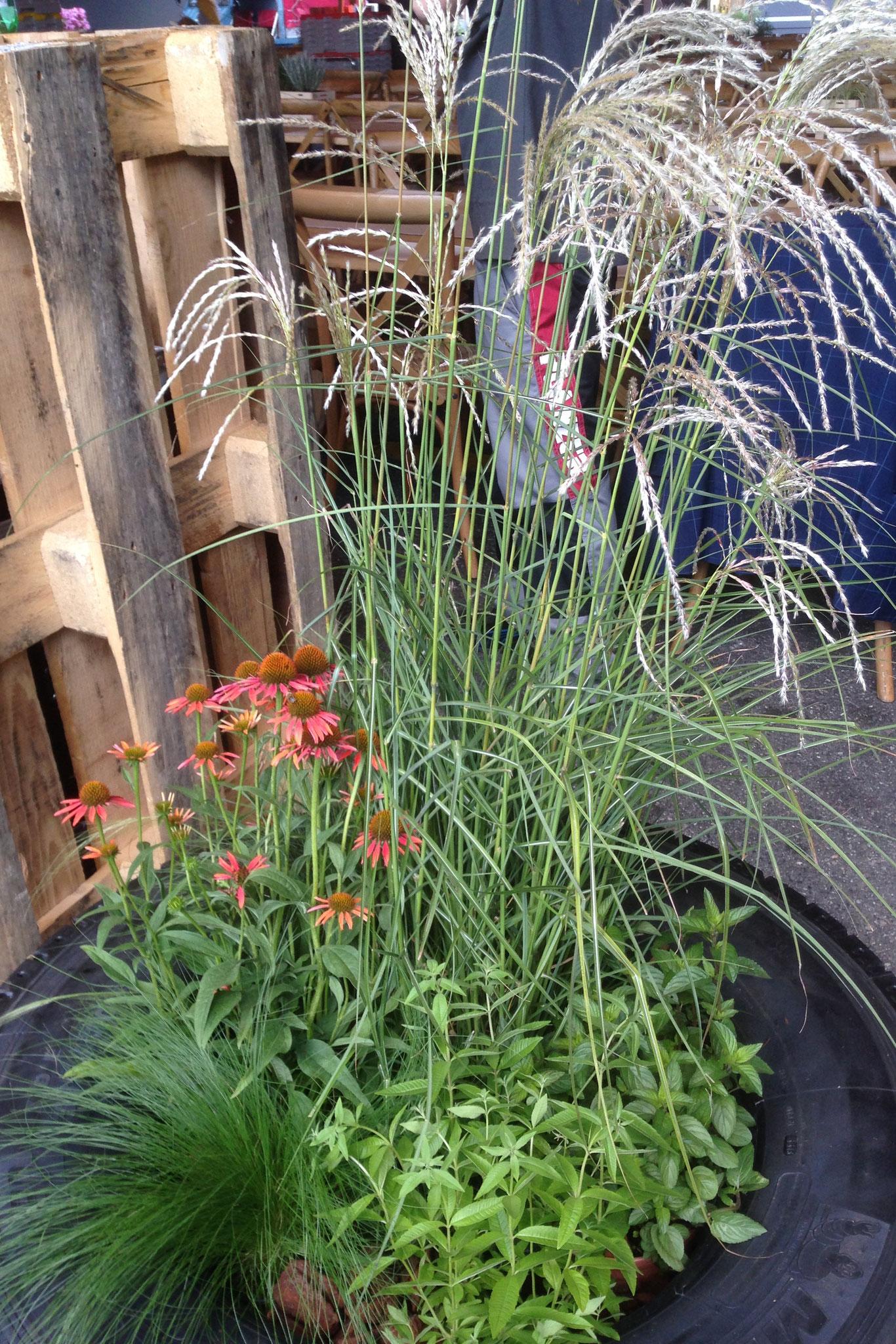 Blumen- und Pflanzenarrangement in altem Pneu