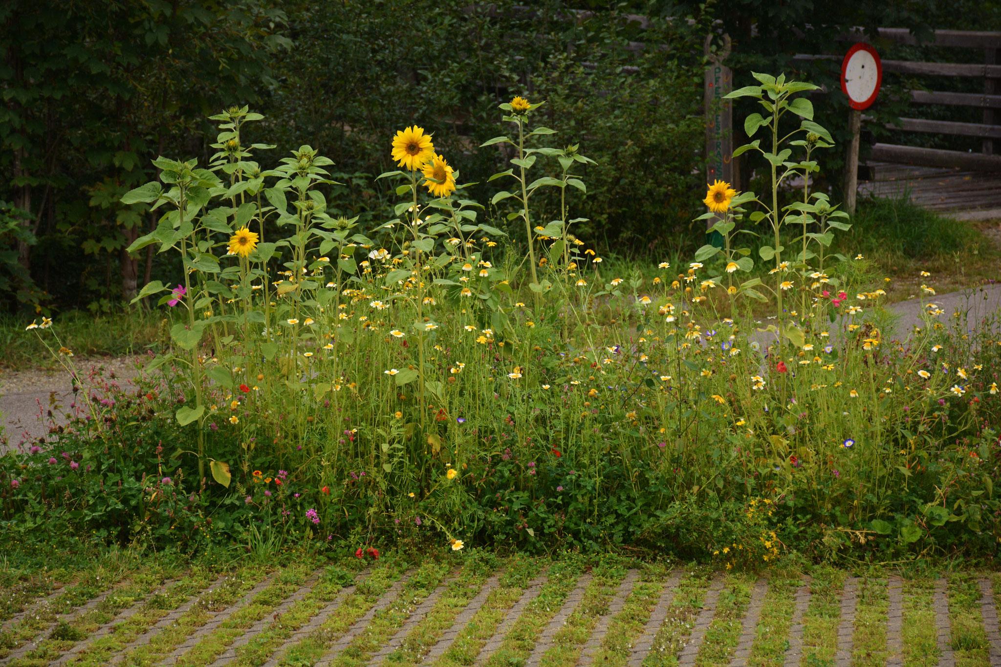 Blumen am Parkplatz
