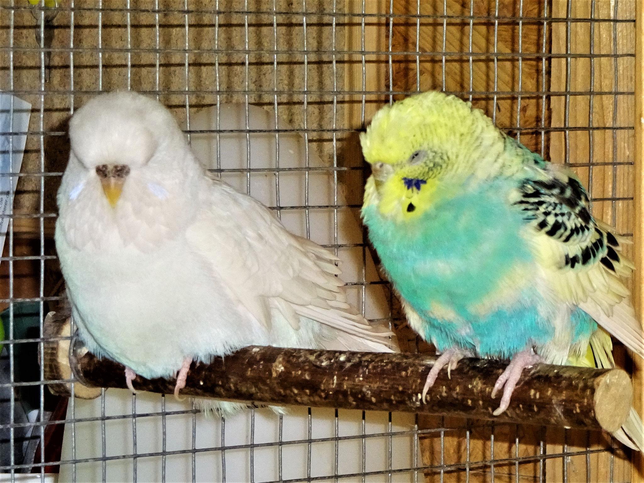 Cleo und Tiffi