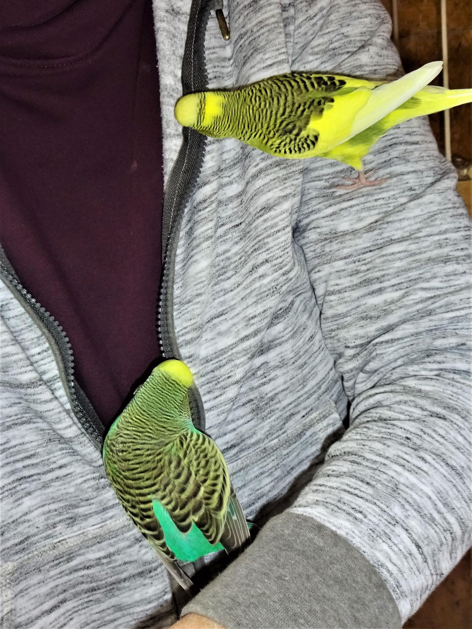 Oscar und Lotte
