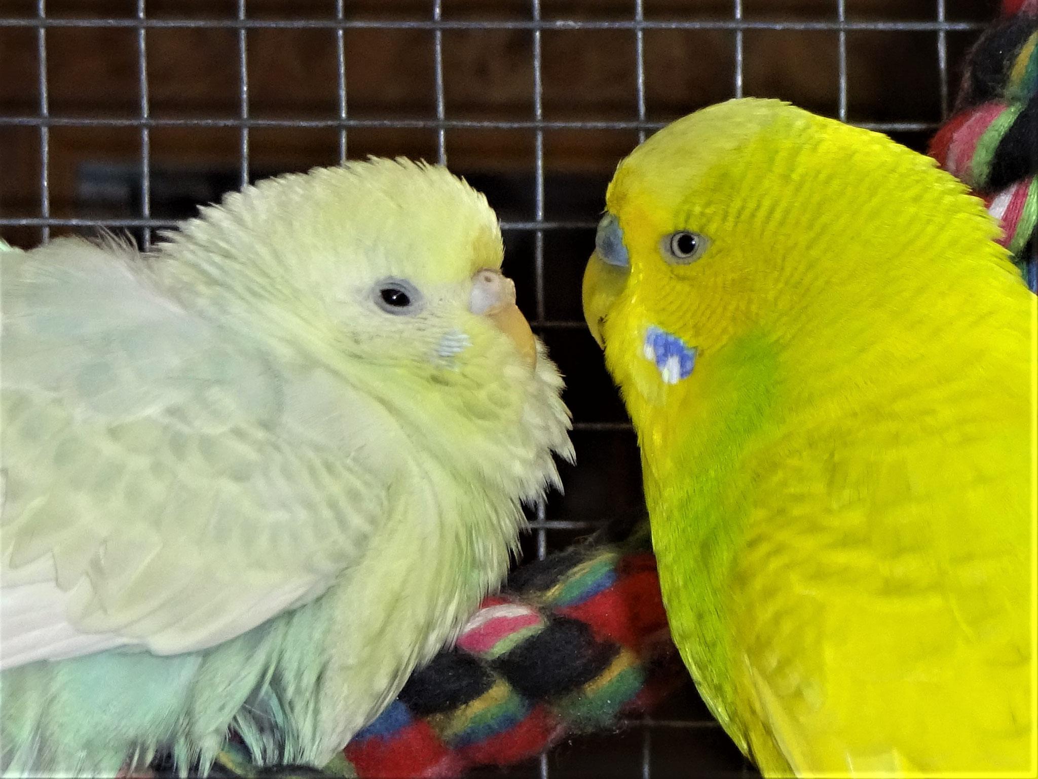 Flocke und Benny
