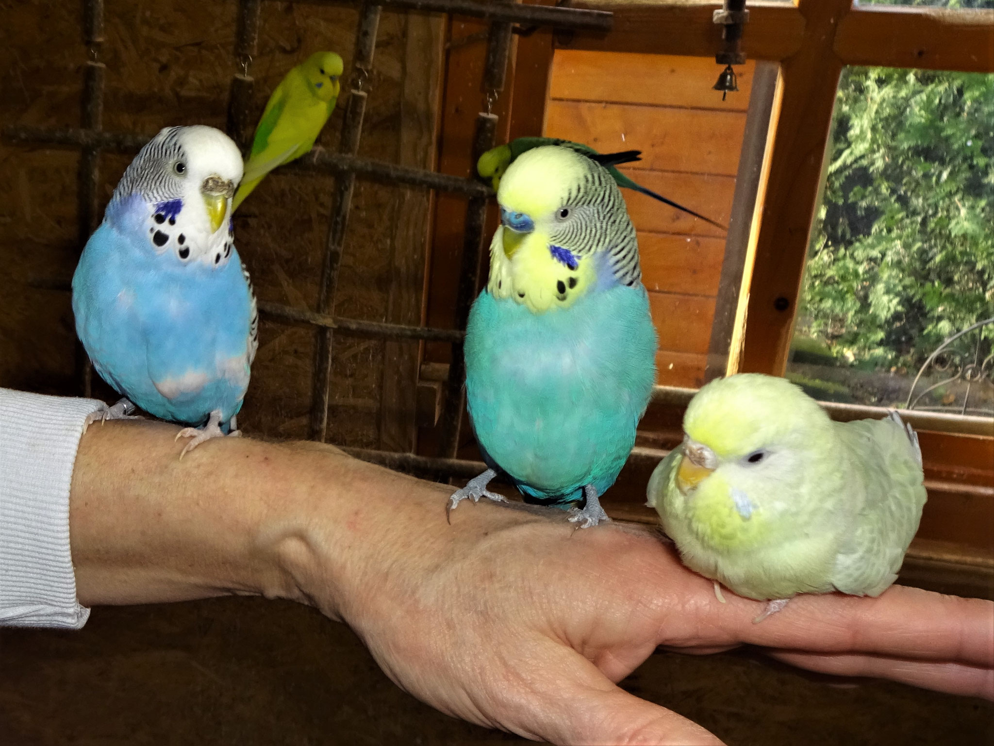 Joline, Jordy, Flocke