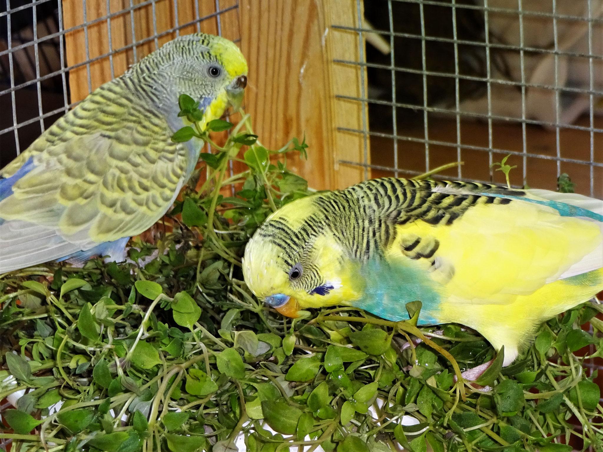 Tini und Strolchi