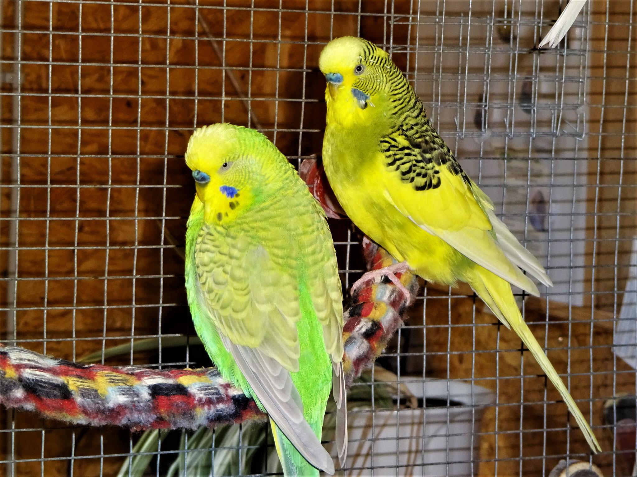 Filou und Oscar