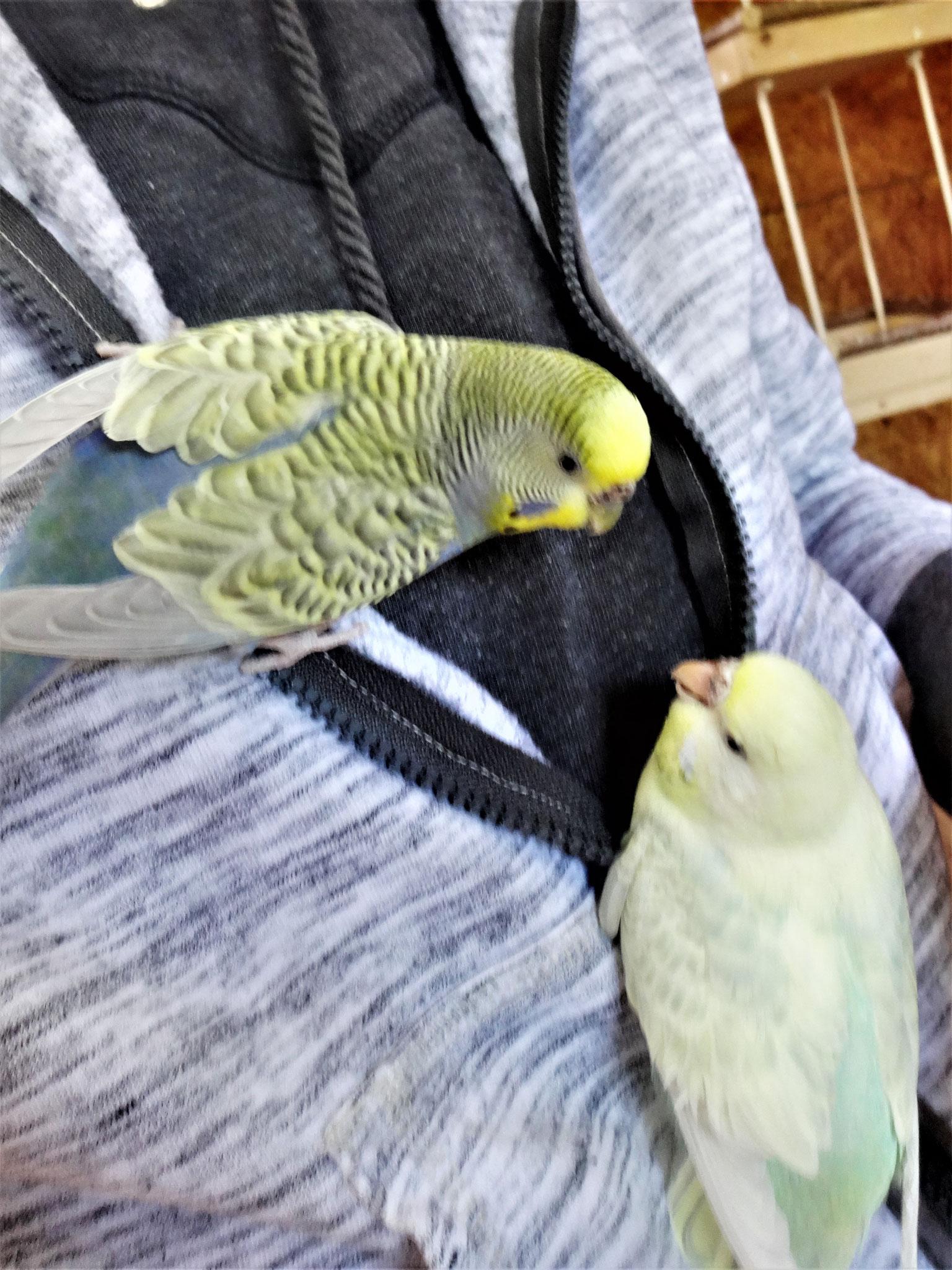 Tini und Flocke
