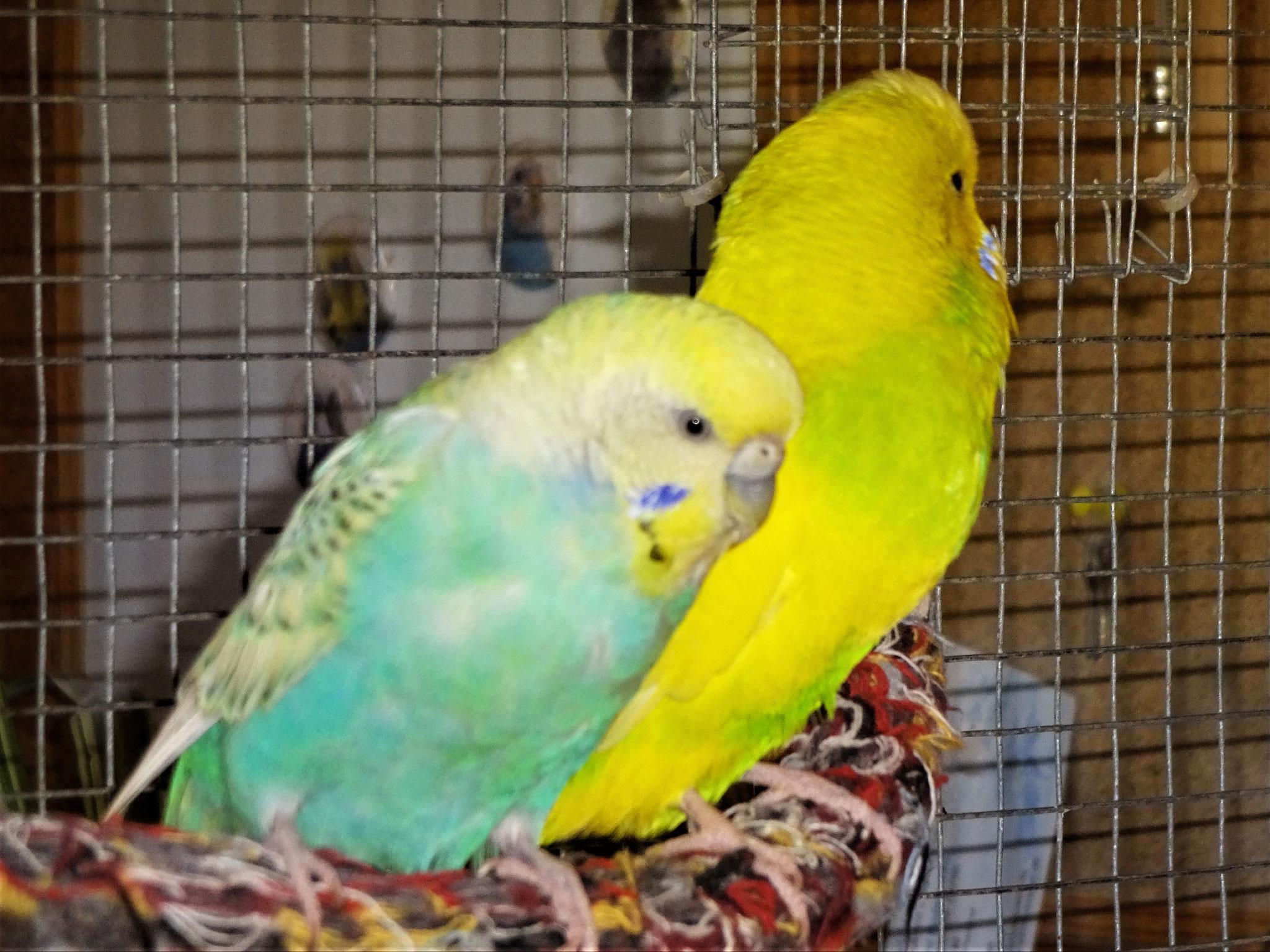 Anni und Benny