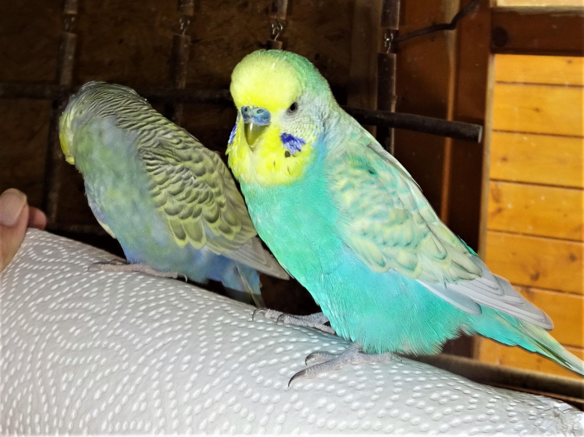 Tini und Flo