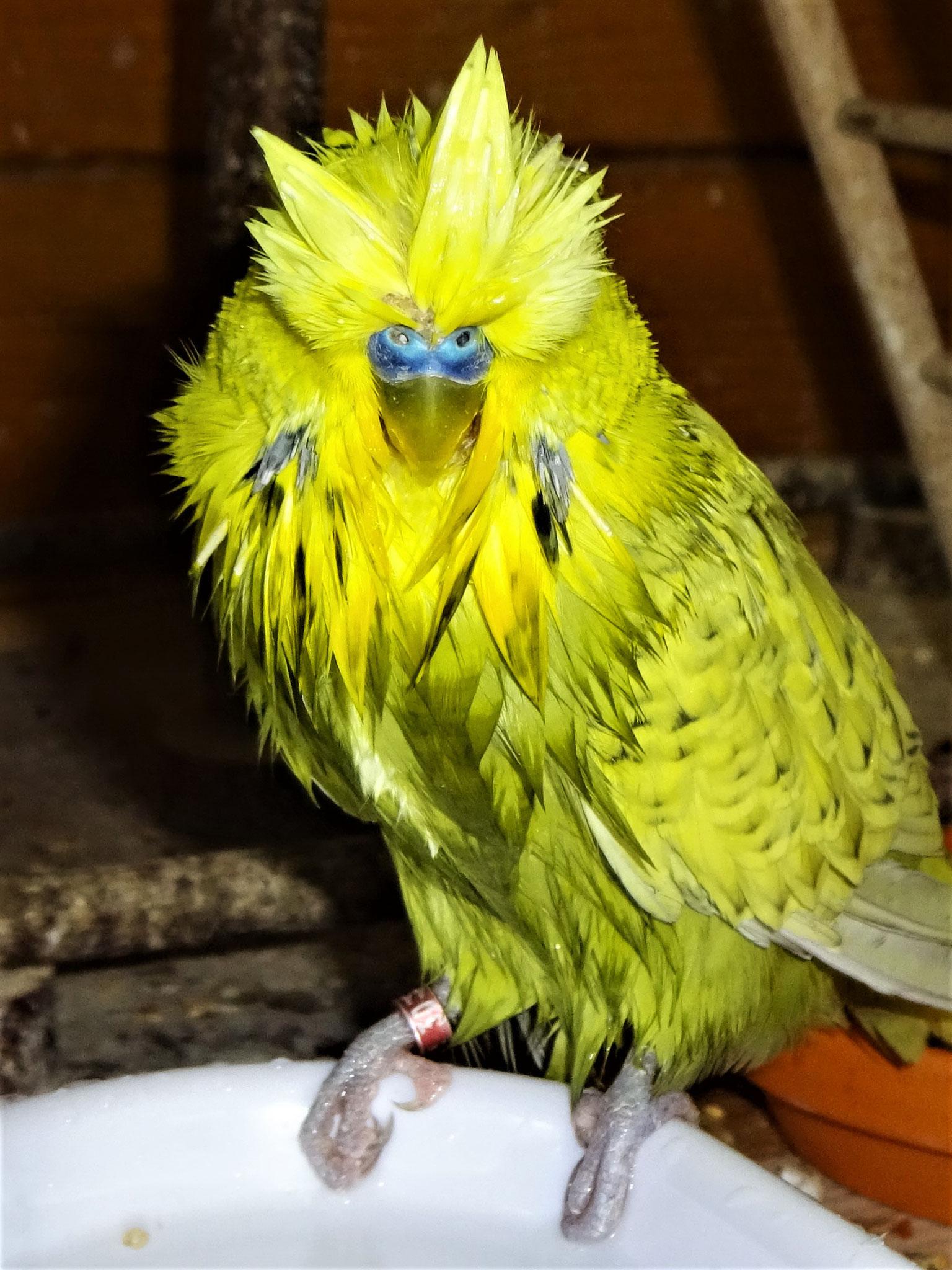 ...coole Frisur, oder? ...  ;-)))