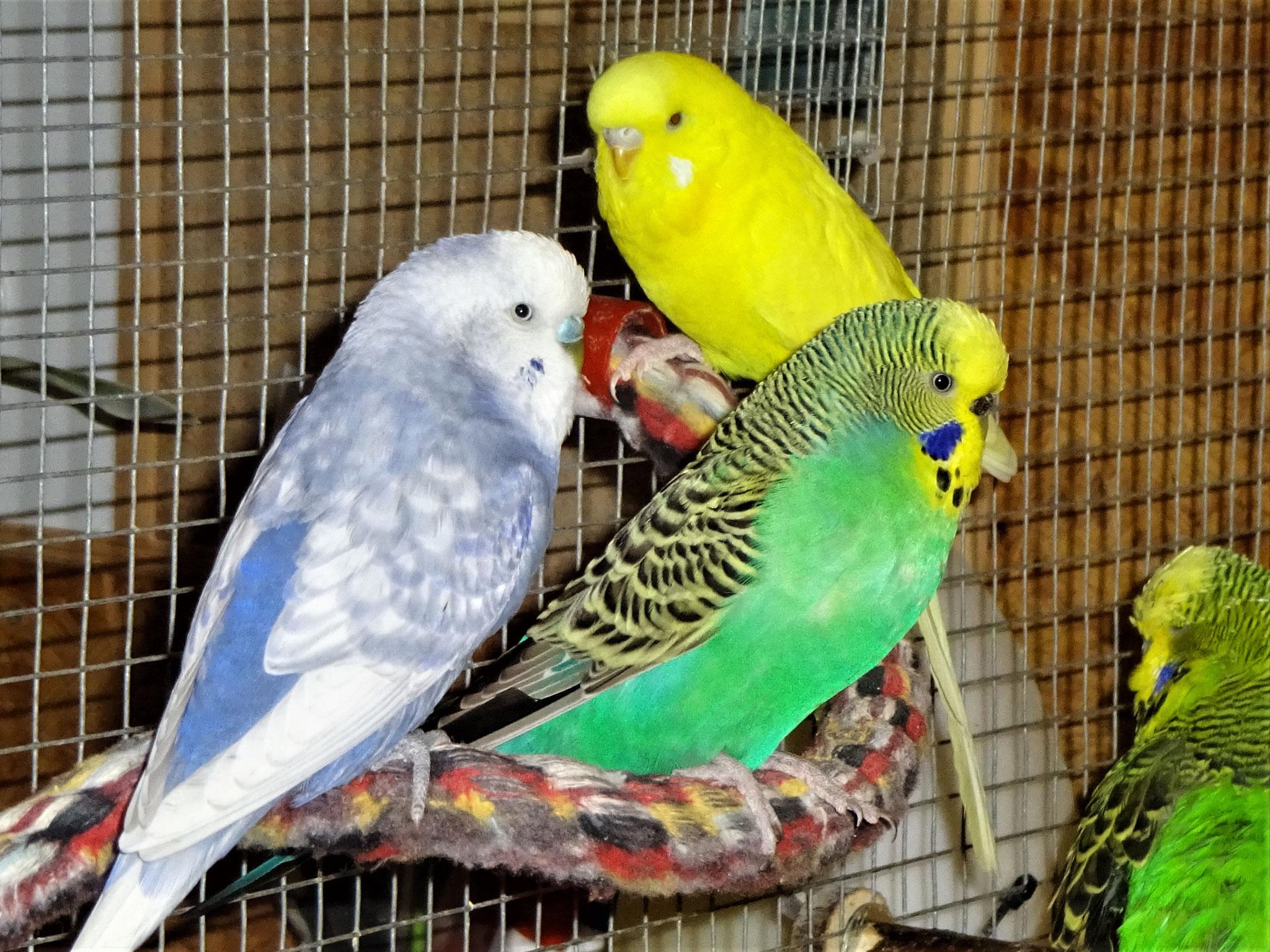 Monty, Lotte und Pepe