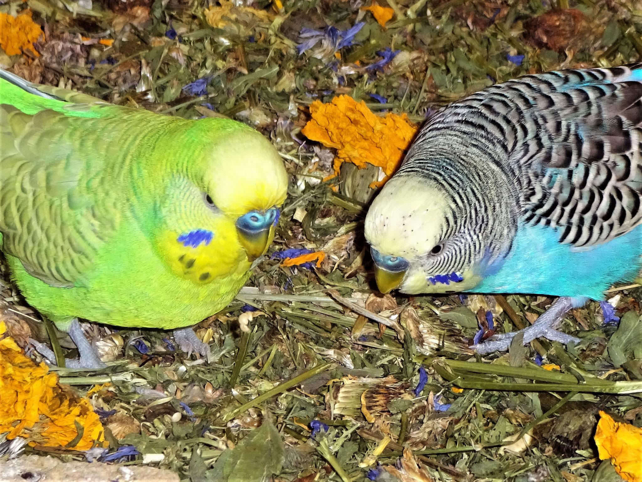 Filou und Jordy