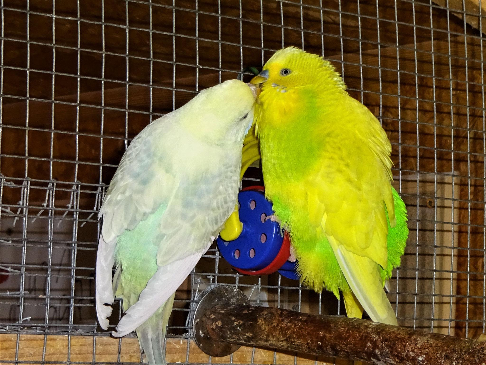 Flocke und Benny am turteln