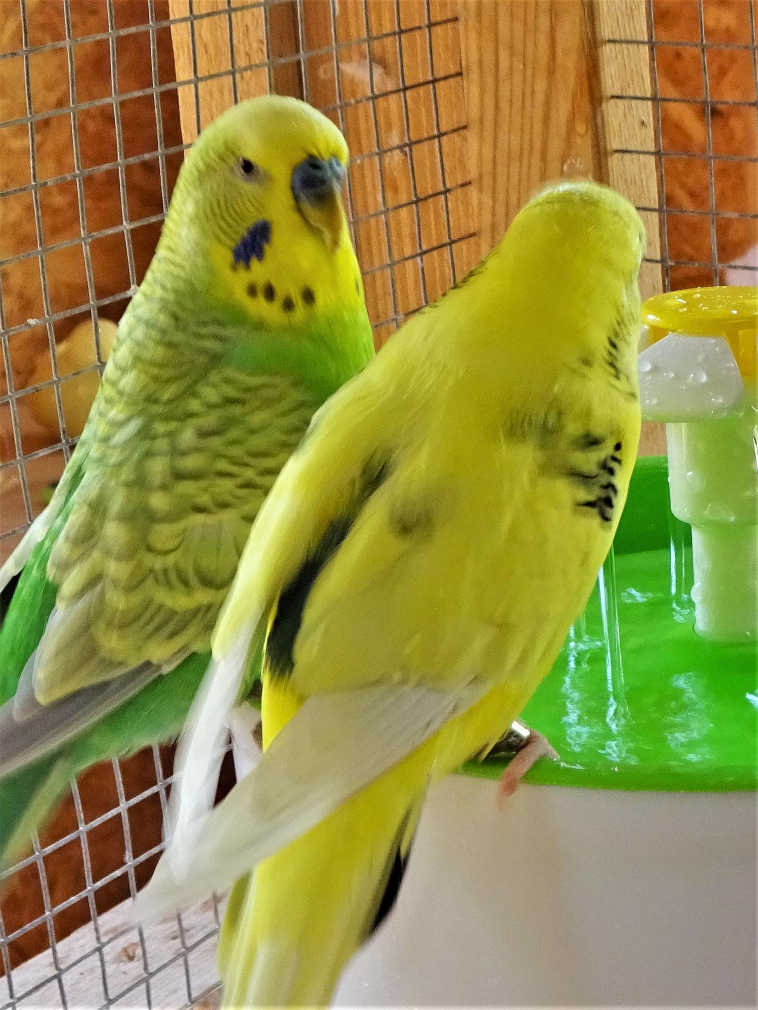 Filou und Tommy