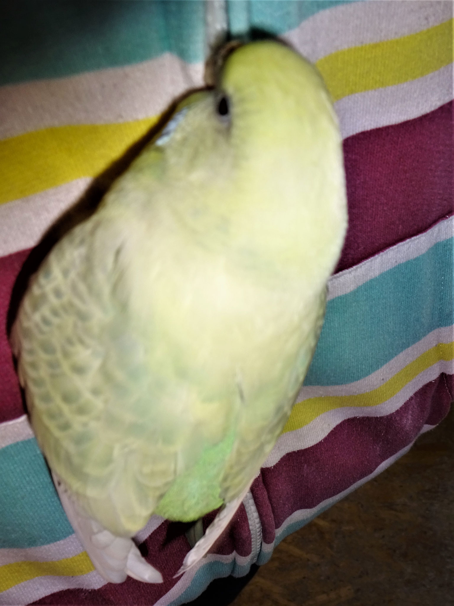 Flocke