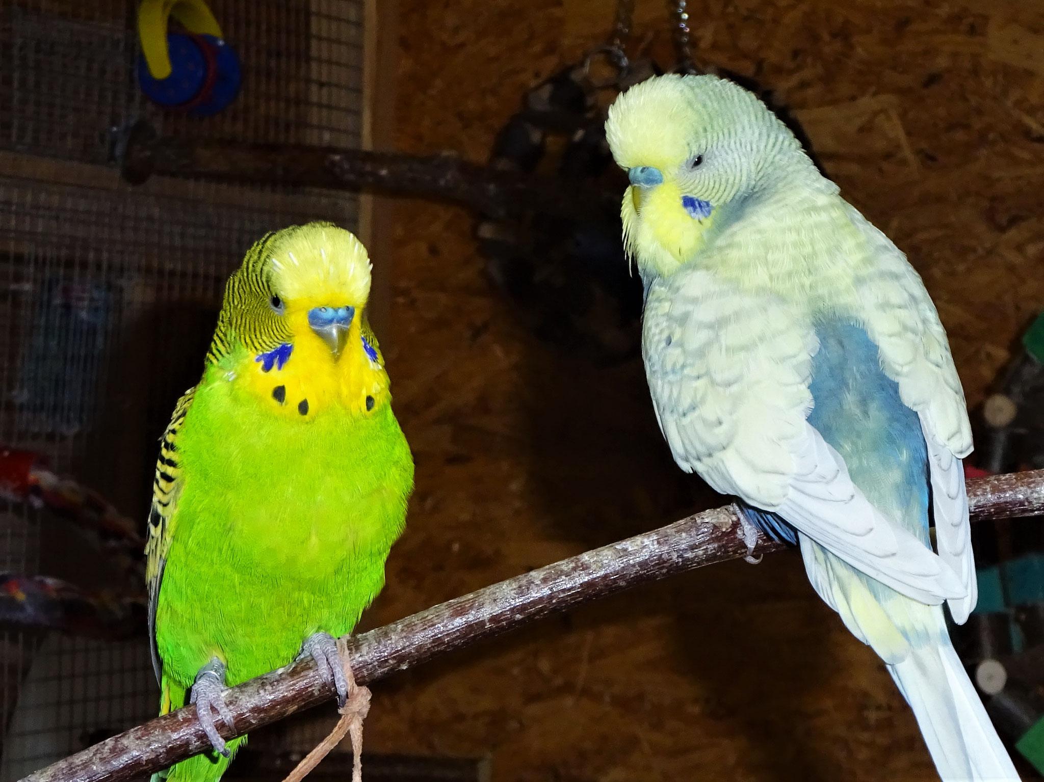 Flip und Leroy :-)