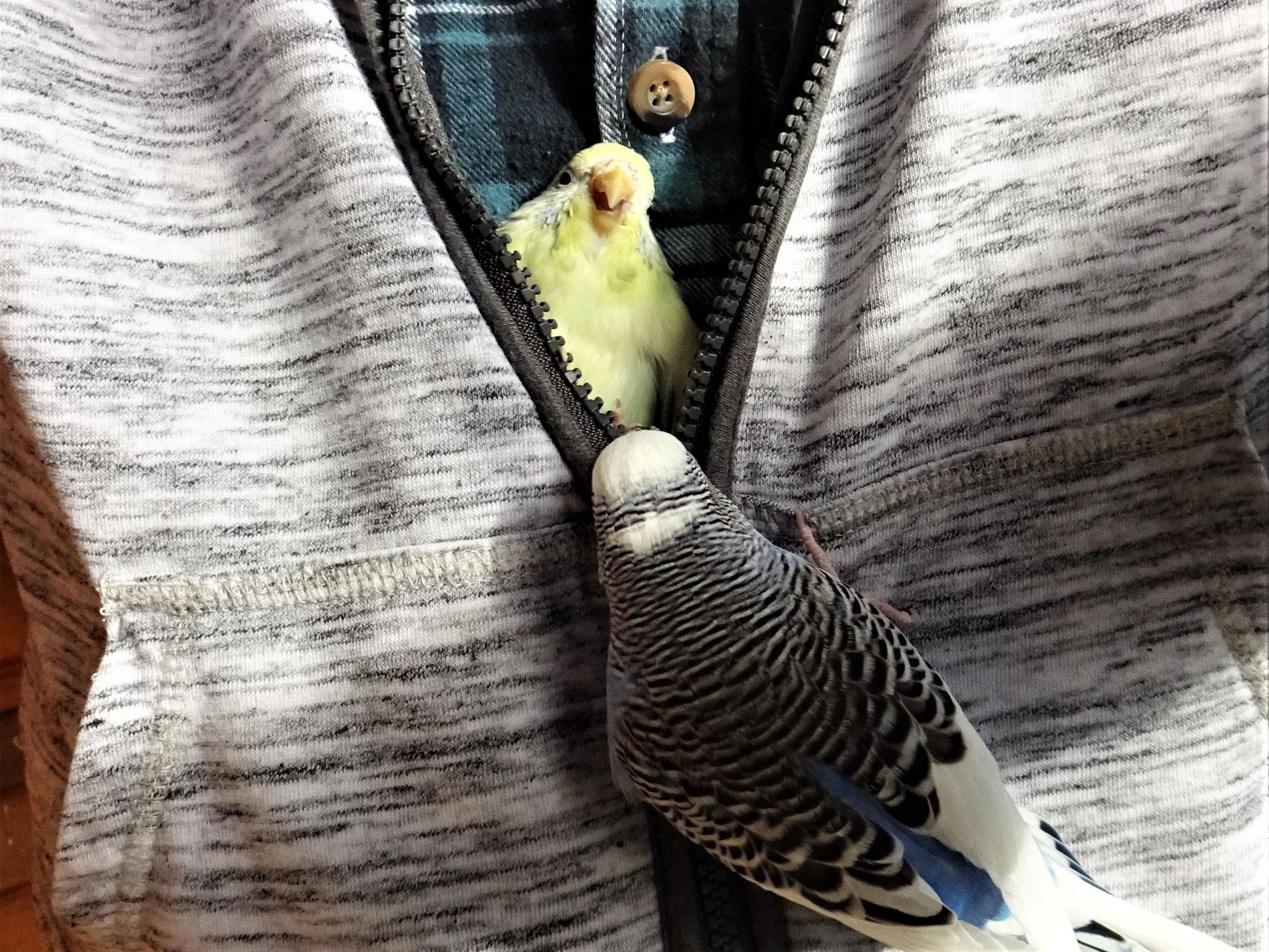 und Flocke (die saß schon die ganze Zeit in meiner Jacke)   ;-)