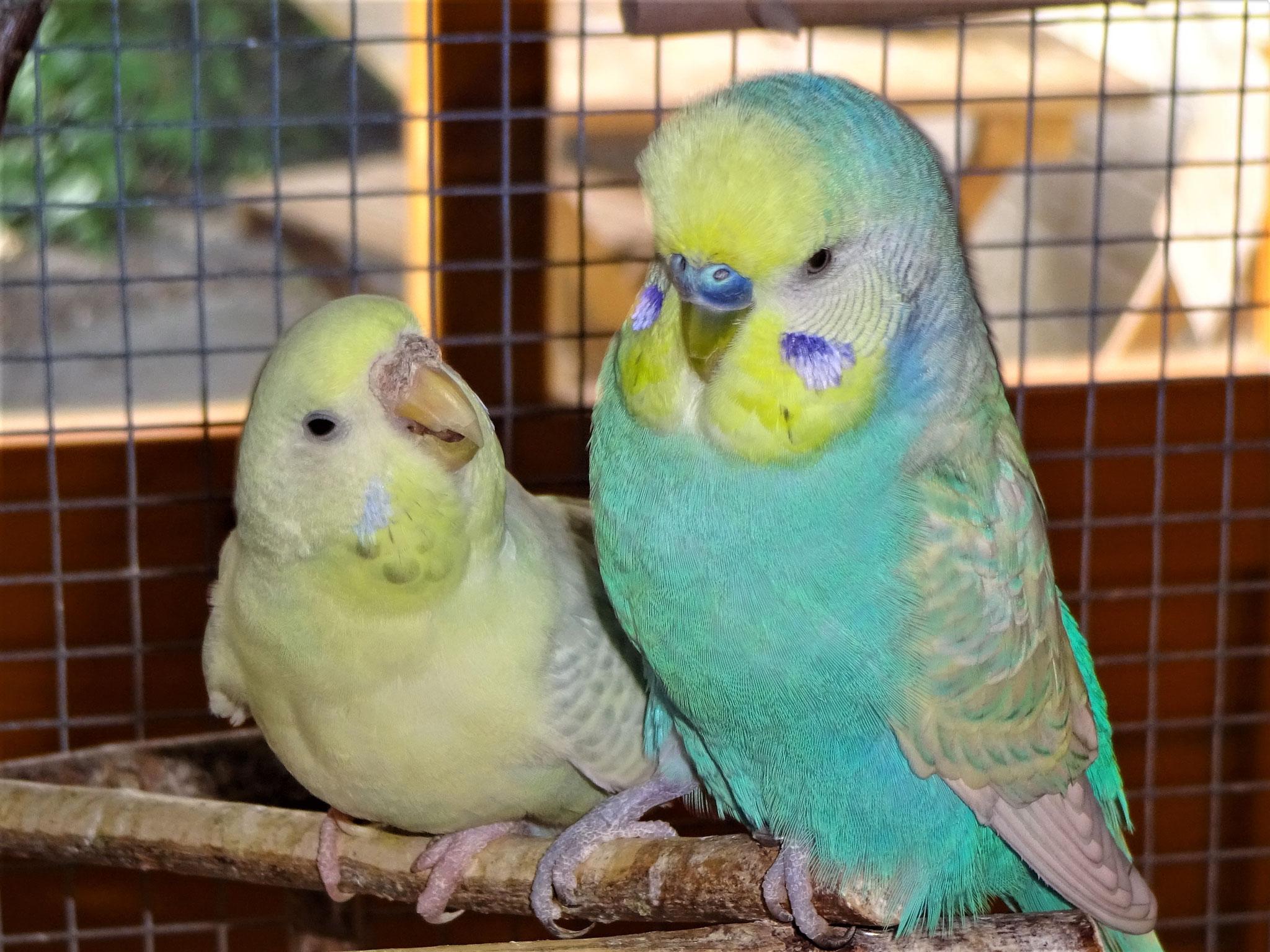 Flocke und Flo
