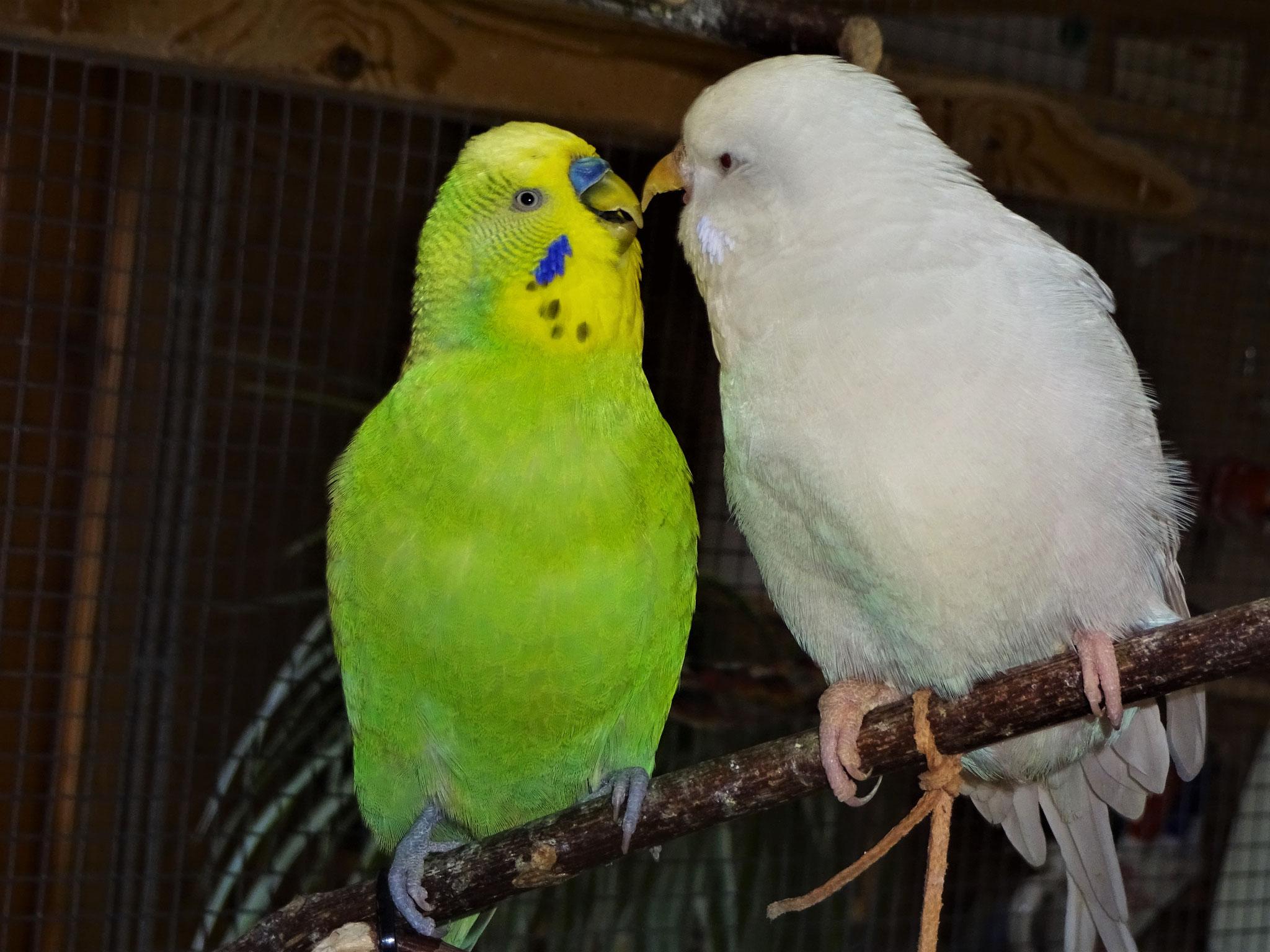 Filou und Cleo :-)